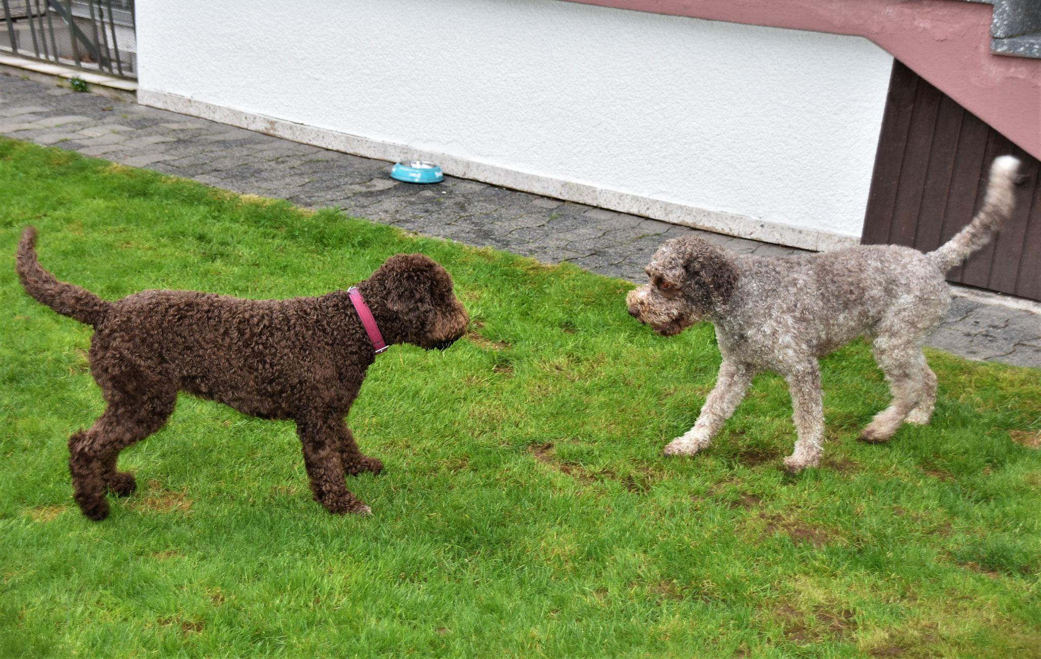Bella und Eddy