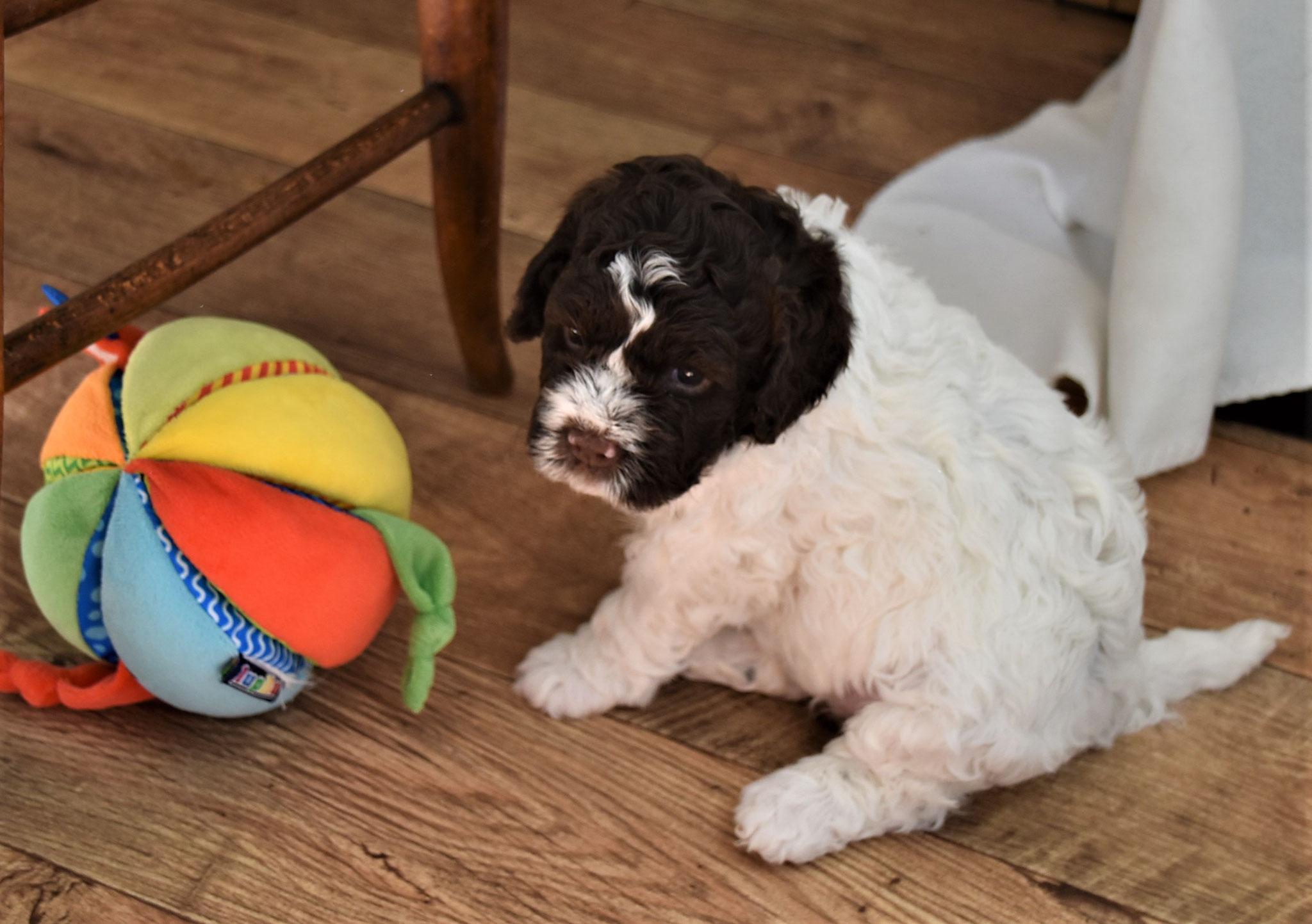 ... und mein Ball