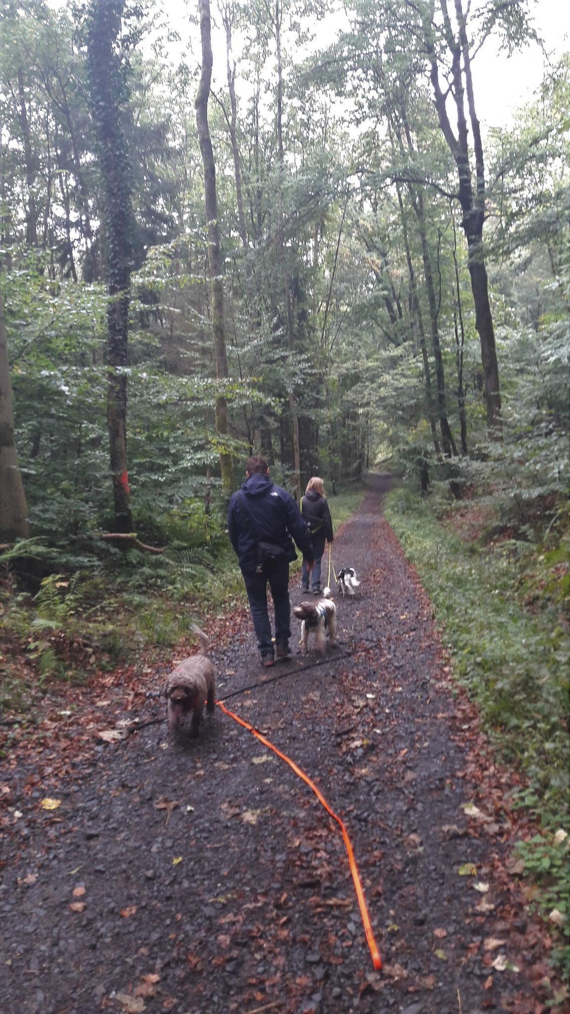 schönes Laufen und Schnüffeln im Wald