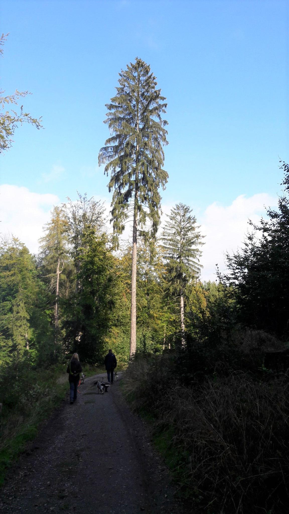wieder im geliebten Wald