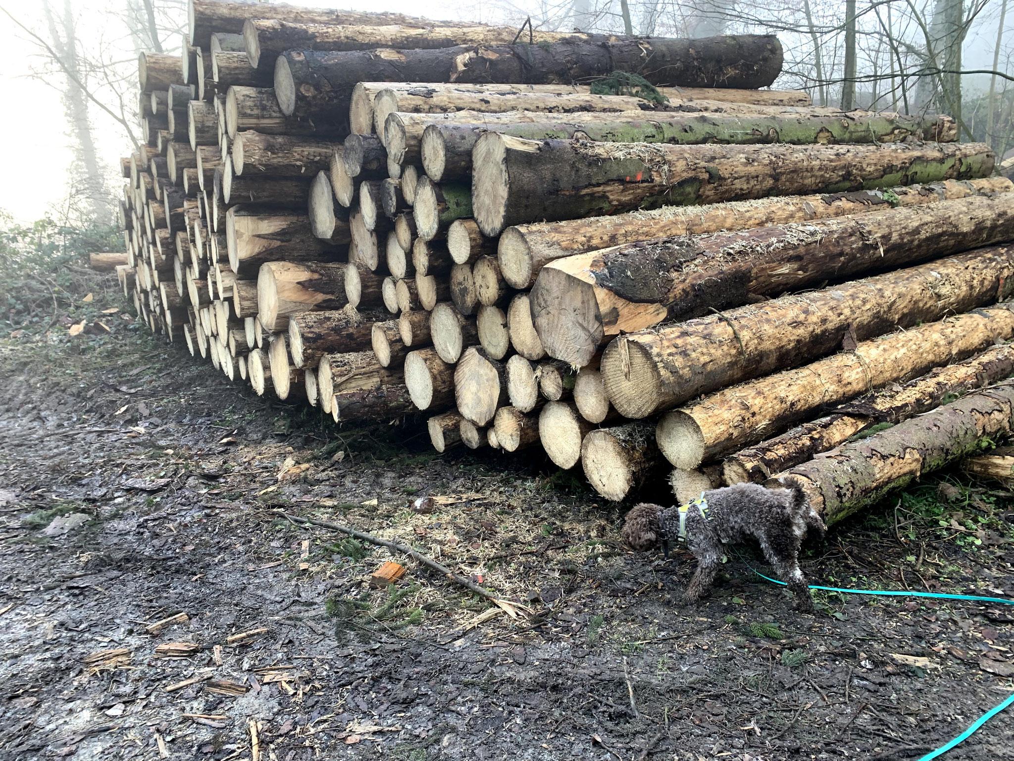 Enno - das ist mein Holz !
