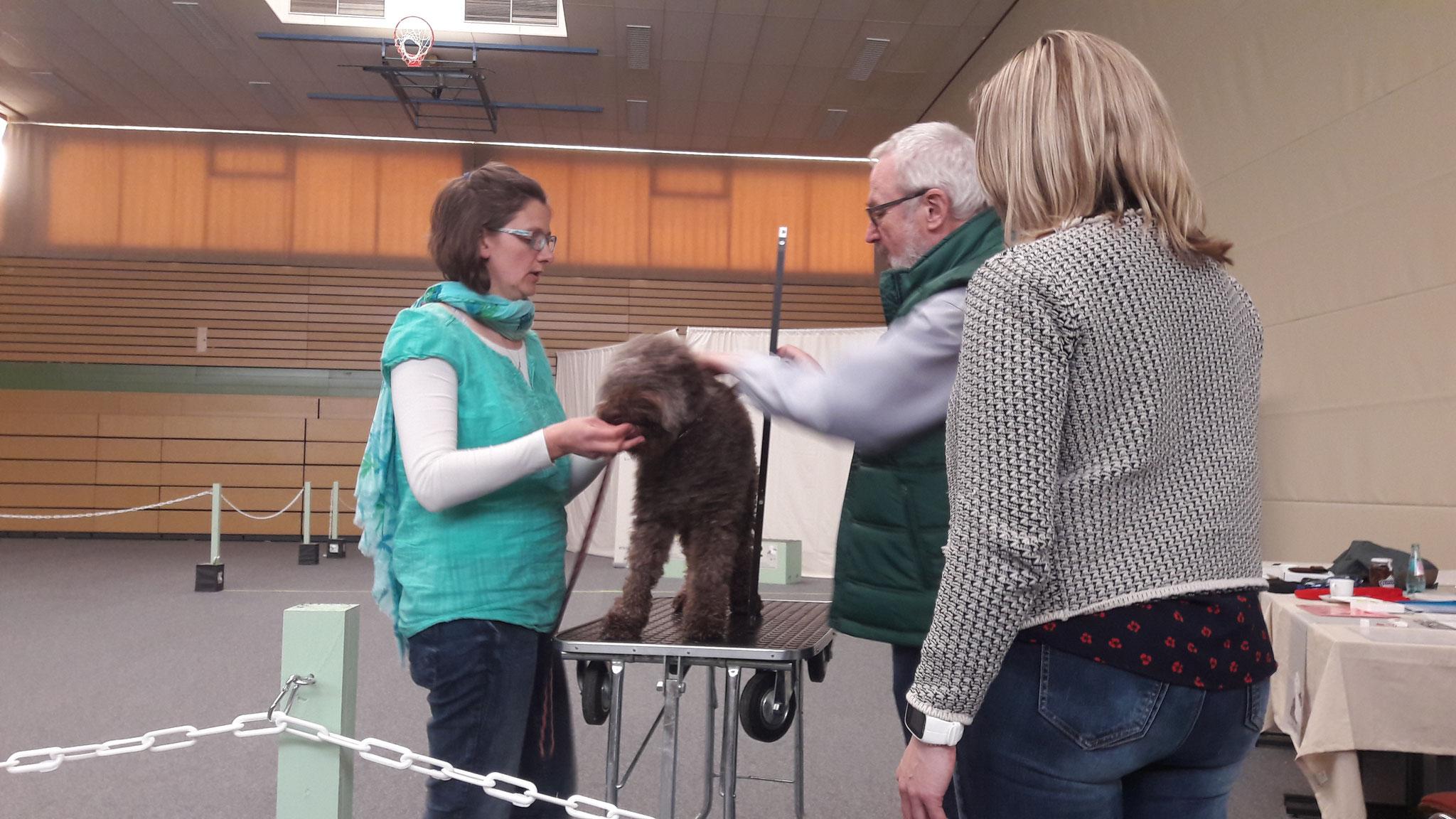 Zuchtzulassungsprüfung - vorgeführt von Tine, geprüft von Jochen Eberhardt und Katrien van Gemert