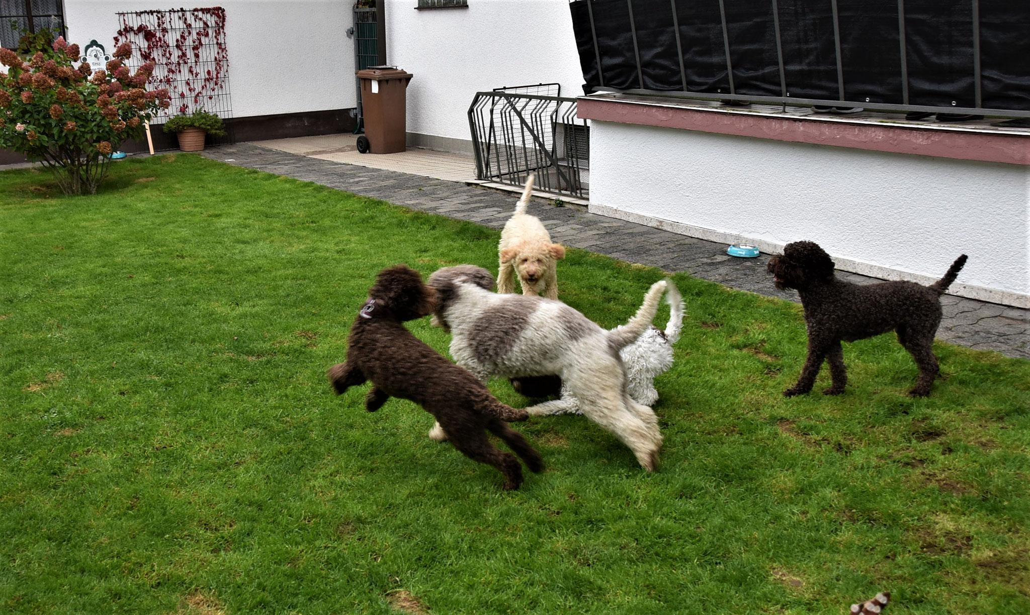 Energie raus lassen, 8 fremde Hunde und doch so harmonisch