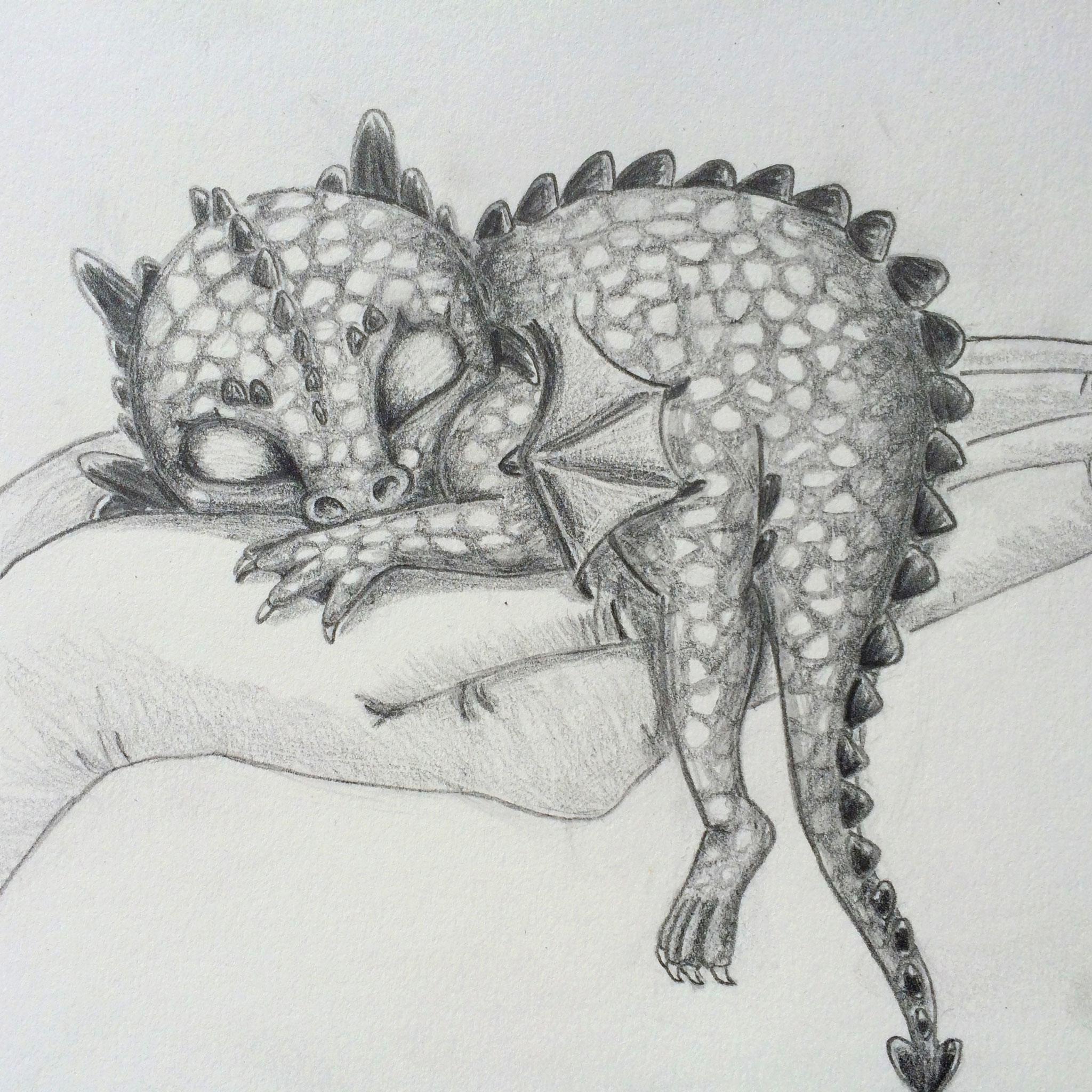 Schlafender Babydrache - Bleistift in verschiedenen Härtegraden