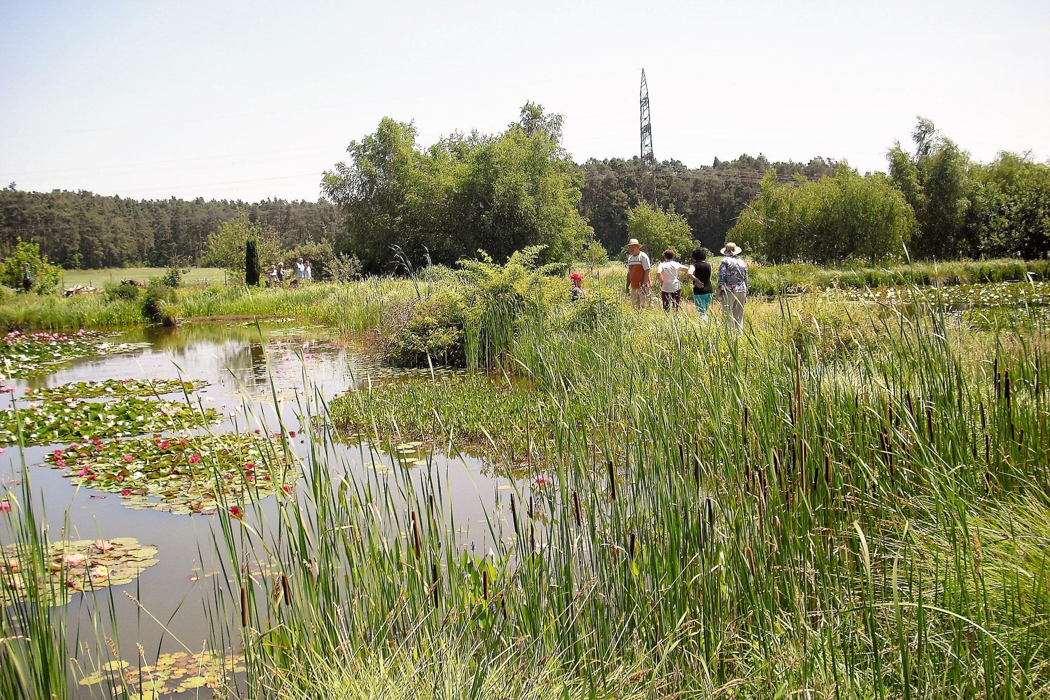 Ein Paradies, nicht nur für Wassergartenfreunde                                  © Wilhelm Kleinlein