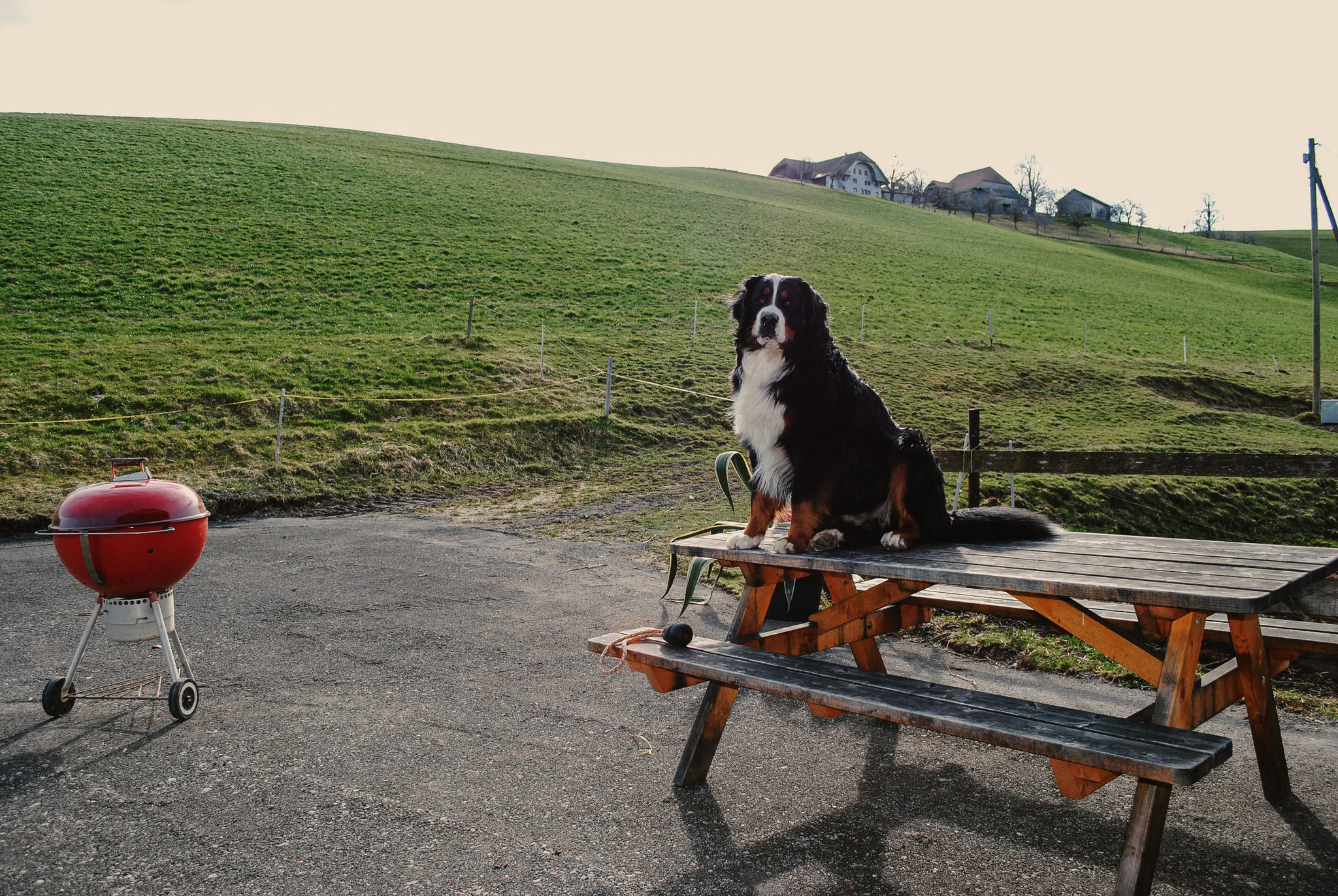 Unser Hofhund Juri hat das Camp für gut befunden.