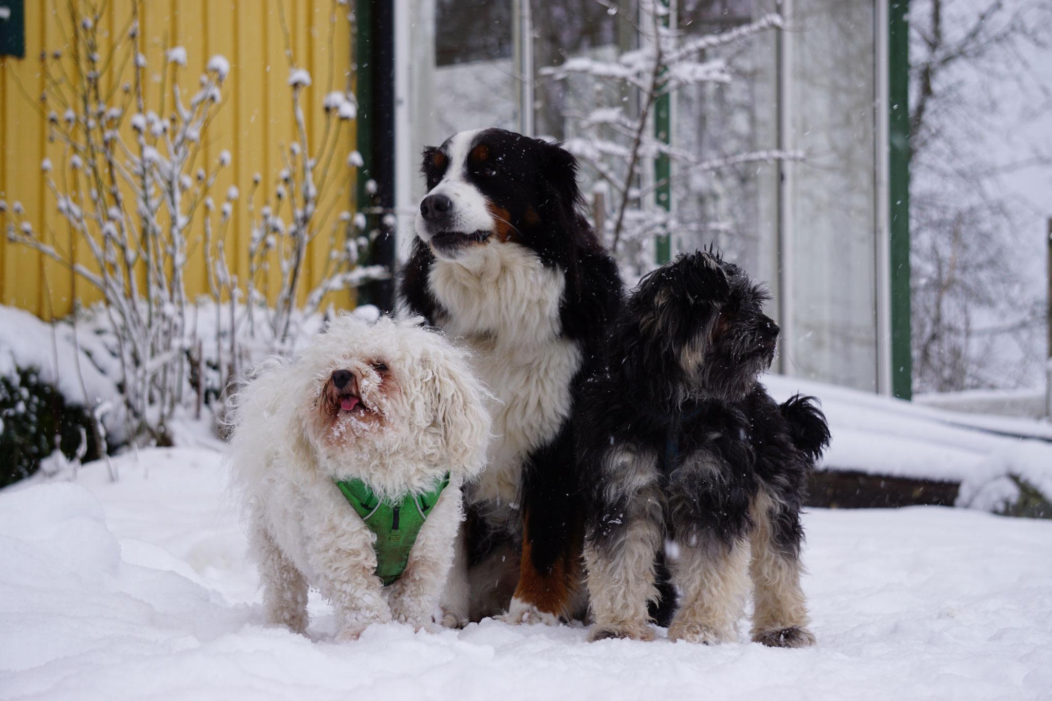 v.l. Rudi, Emma und Jule