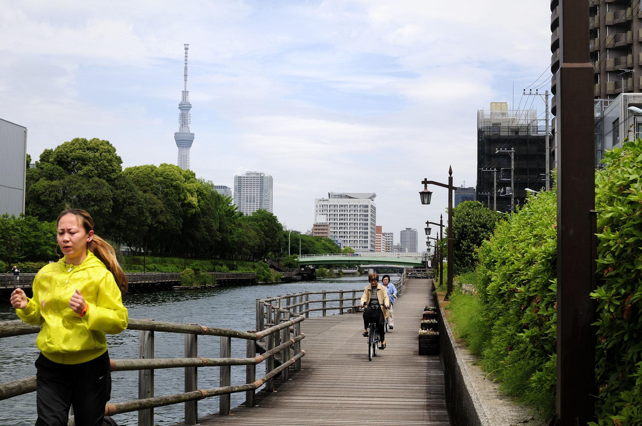 水辺の散策路が整備された横十間川。歩行者優先、水面では手漕ぎボートの 通航優先