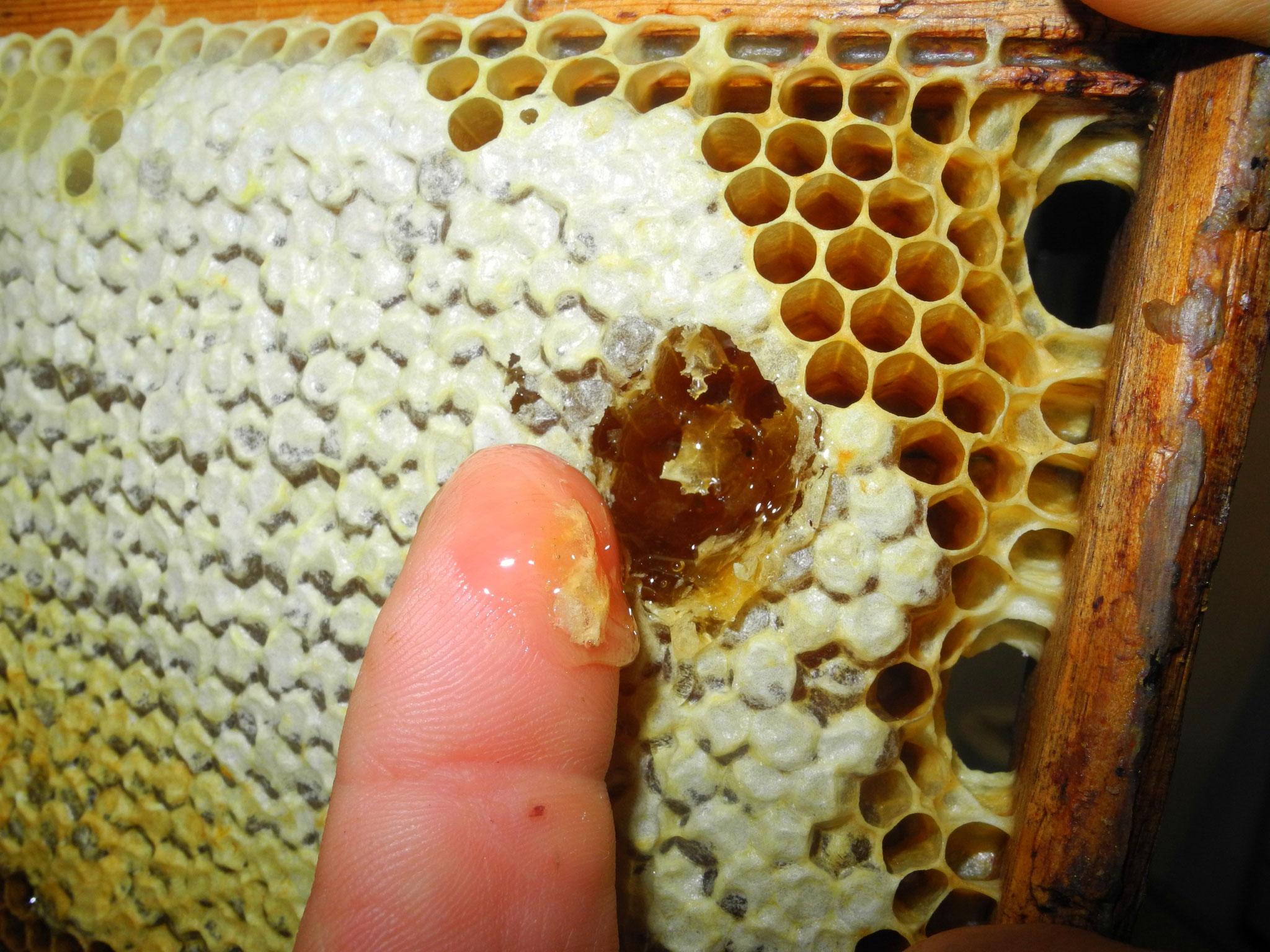 Verdeckelter Honig