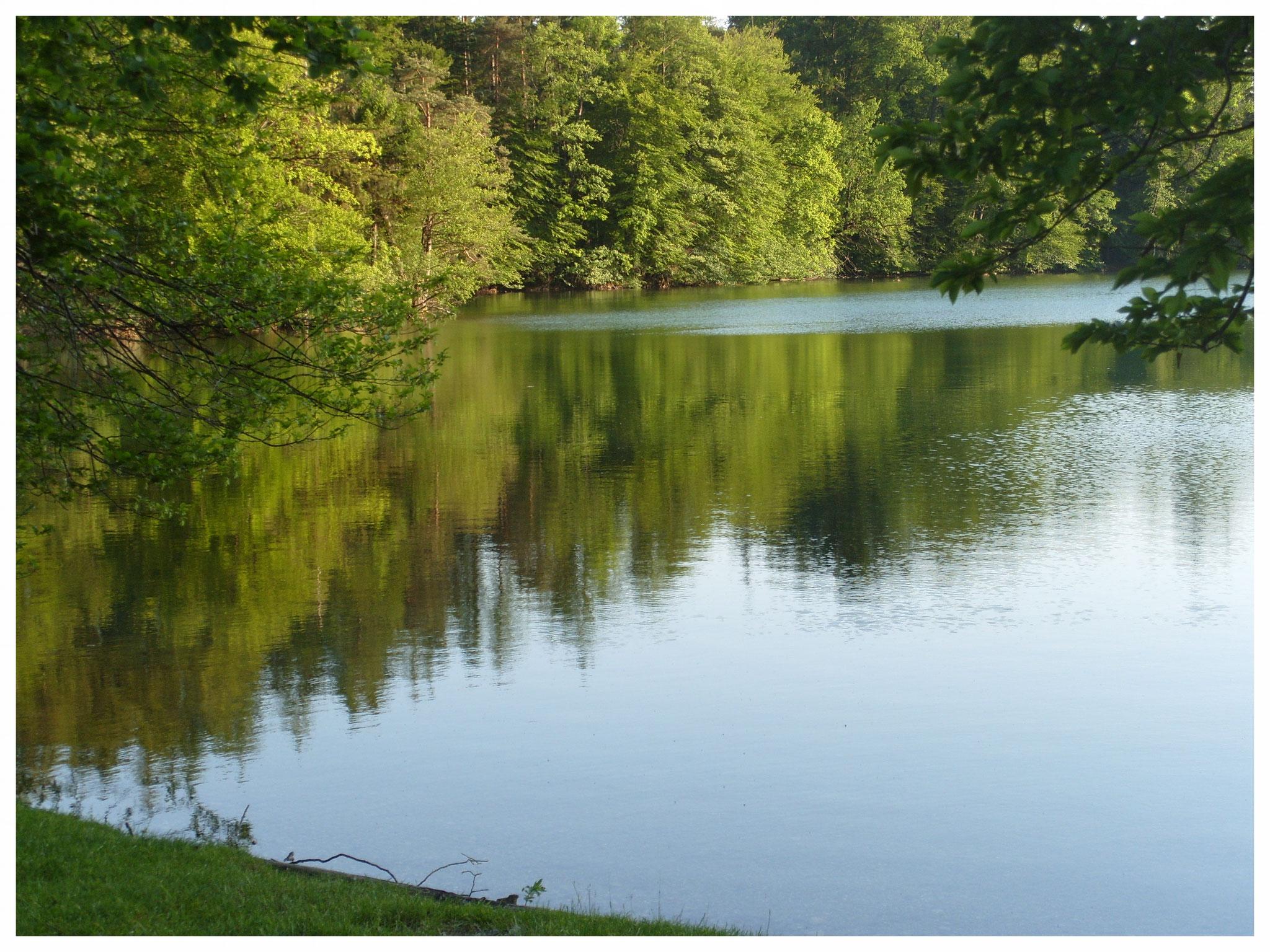 Langbürgner See - Geheimtipp für Naturfreunde