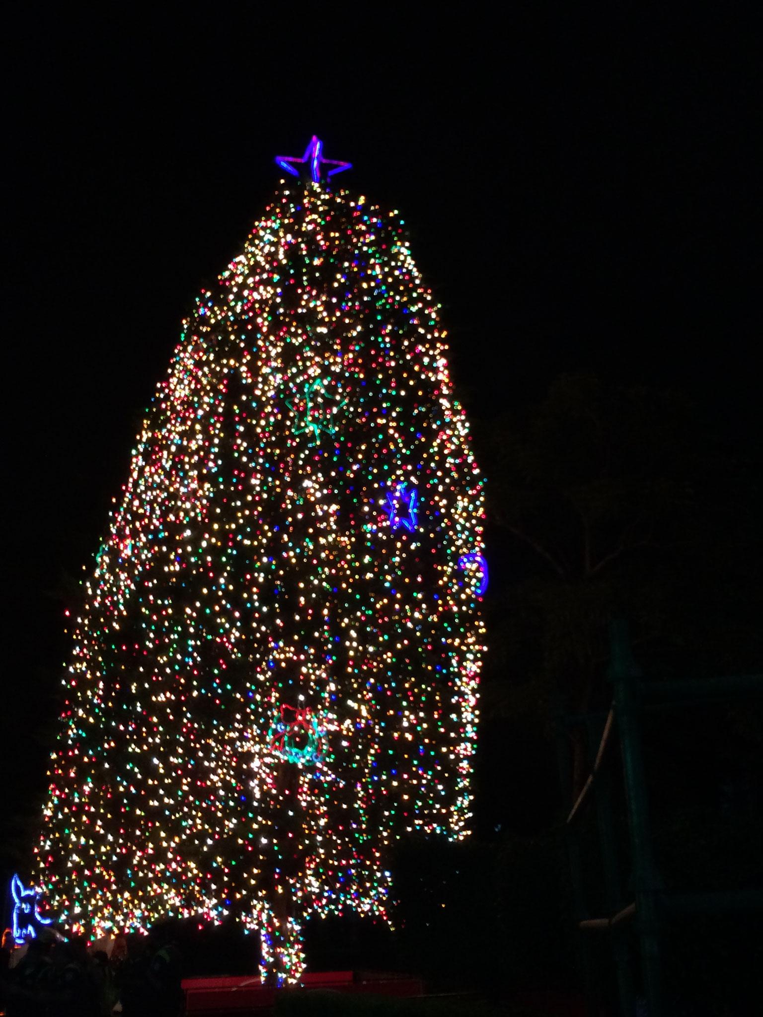 Der Weihnachtsbaum vor dem Kinderkrankenhaus