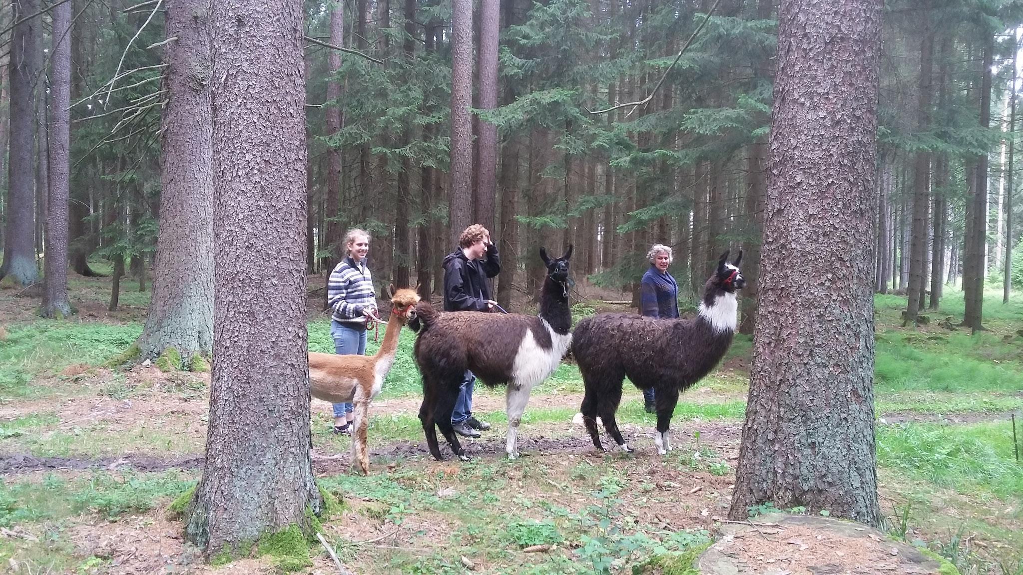 Familie und Lamas