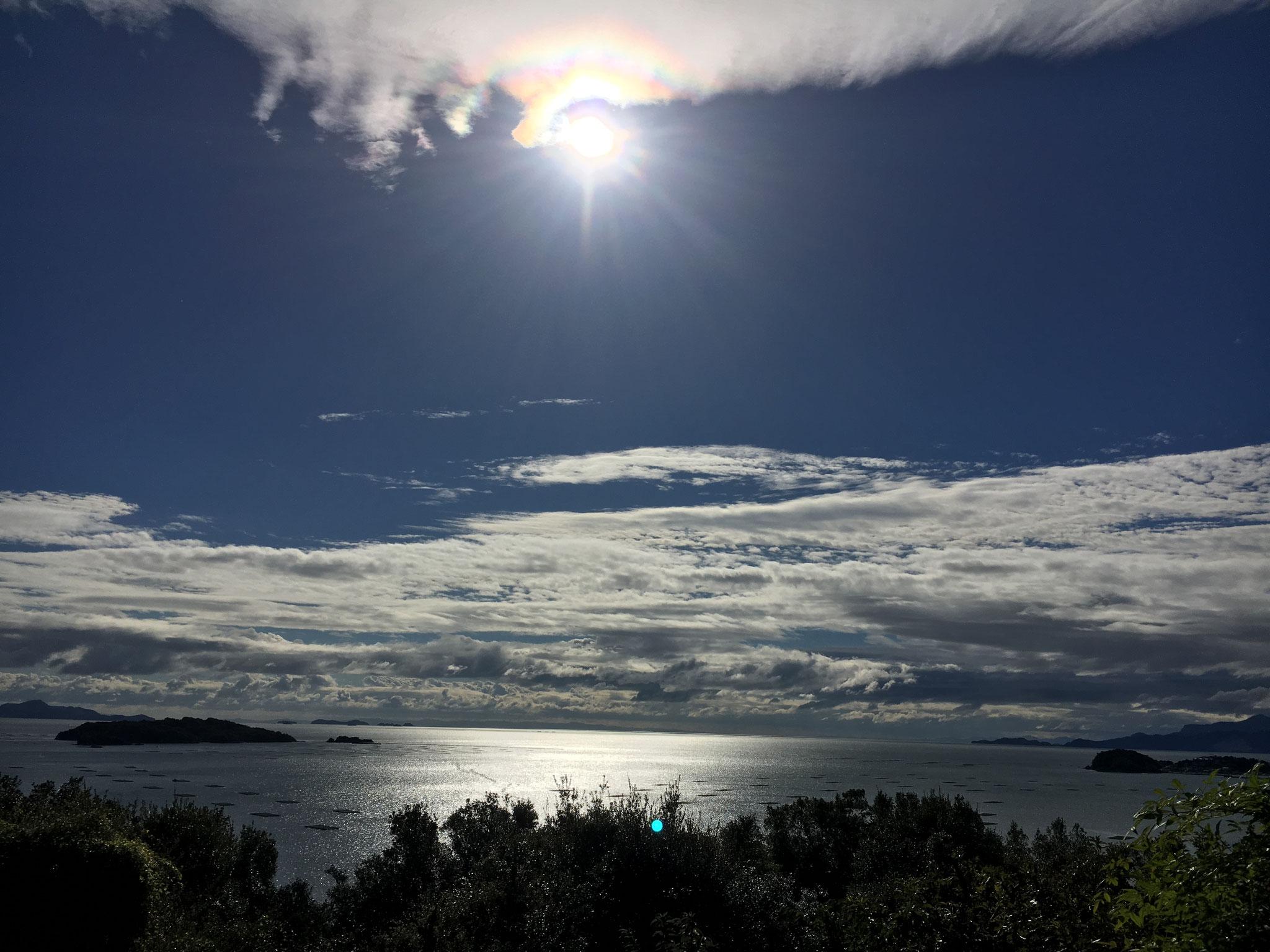 みかん山から見た夏の水平線