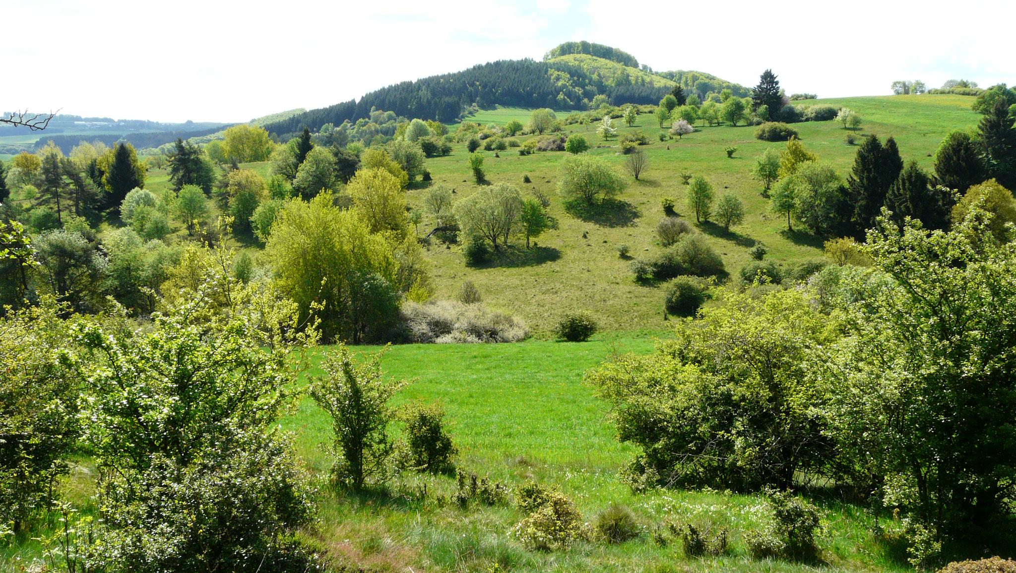 Döhmberg mit Obereher Heide