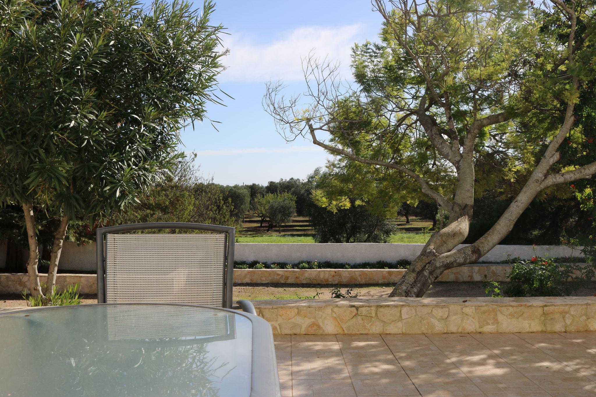 Lecce 5 - Terras met uitzicht op olijfbomen.