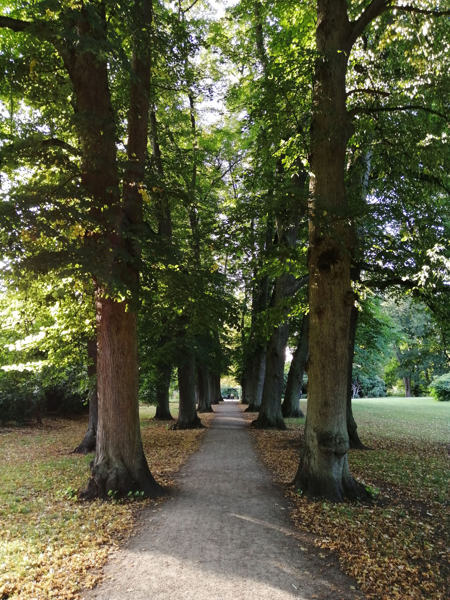 Lindenallee Hirschpark