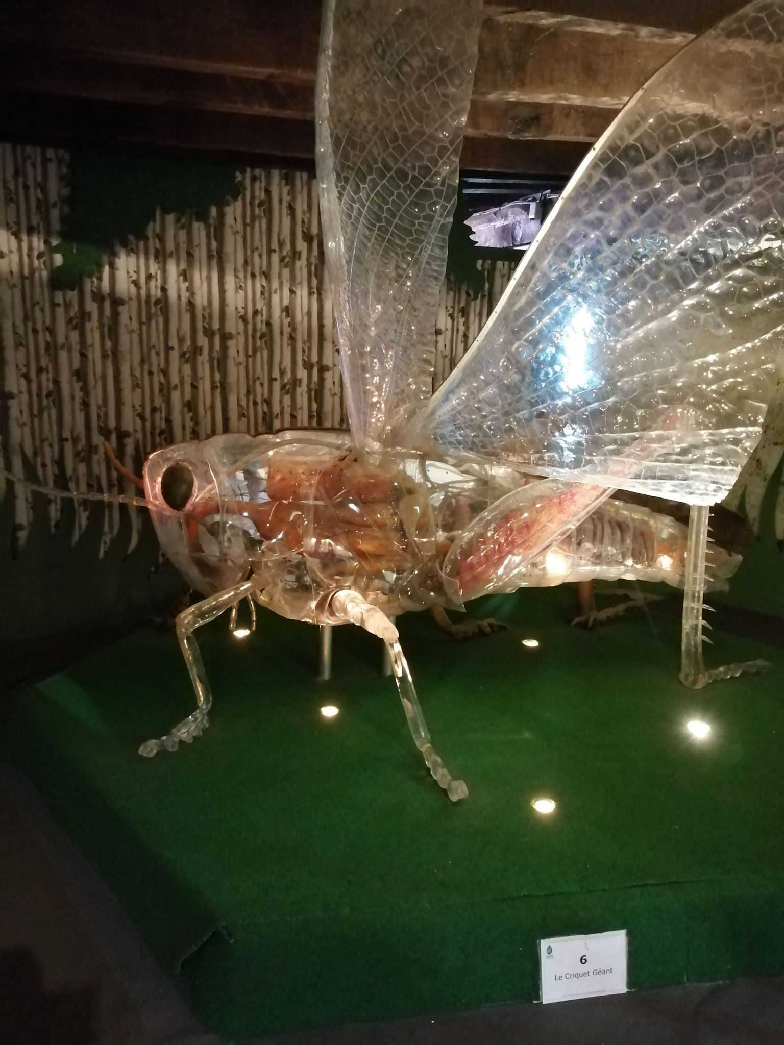 été 2021 : sortie à la Cité des Insectes