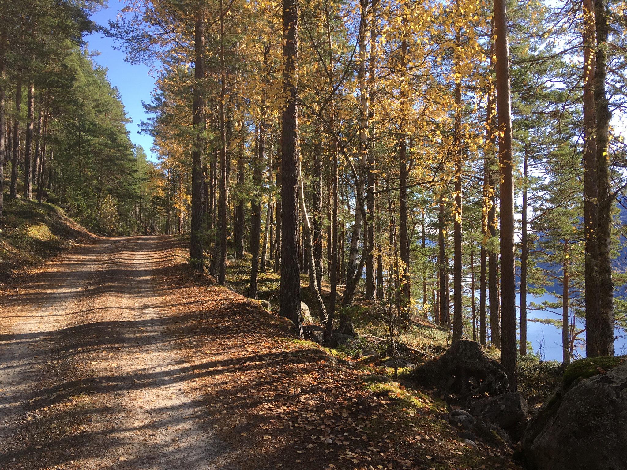 på skogsbilvei langs med Tinnsjøn
