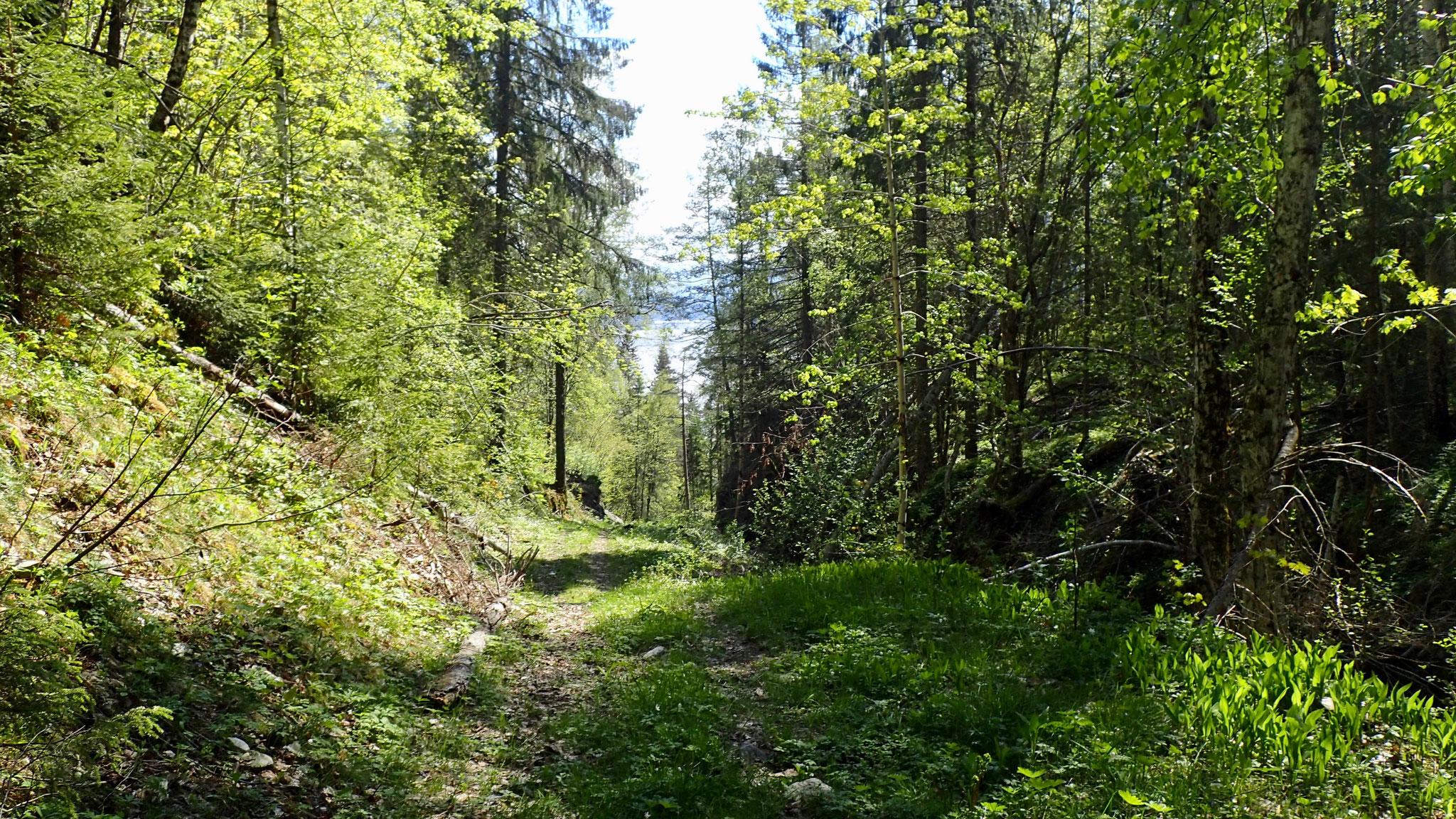 schöner Waldwerg