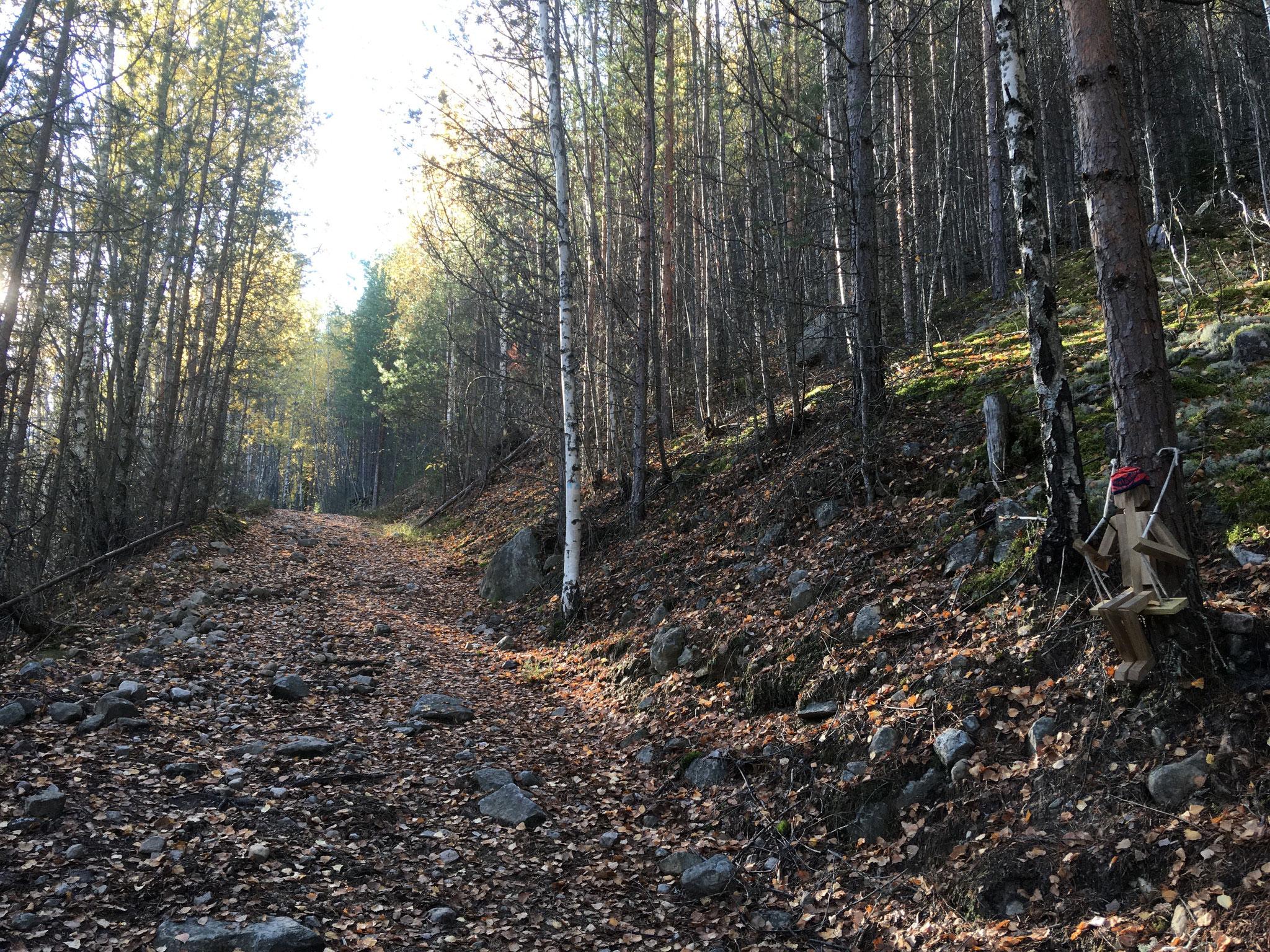 skogsvei nedover mot Sandviken Camping