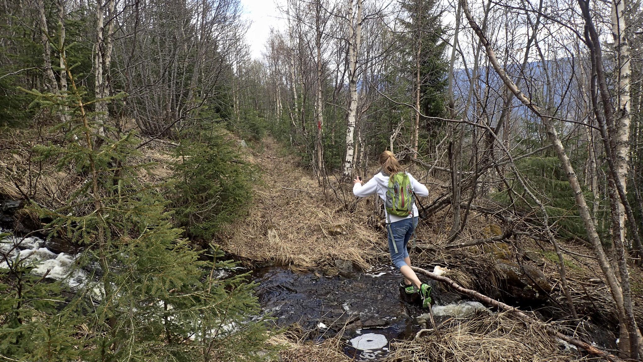 erhöhter Wasserstand nach der Schneeschmelze im Mai