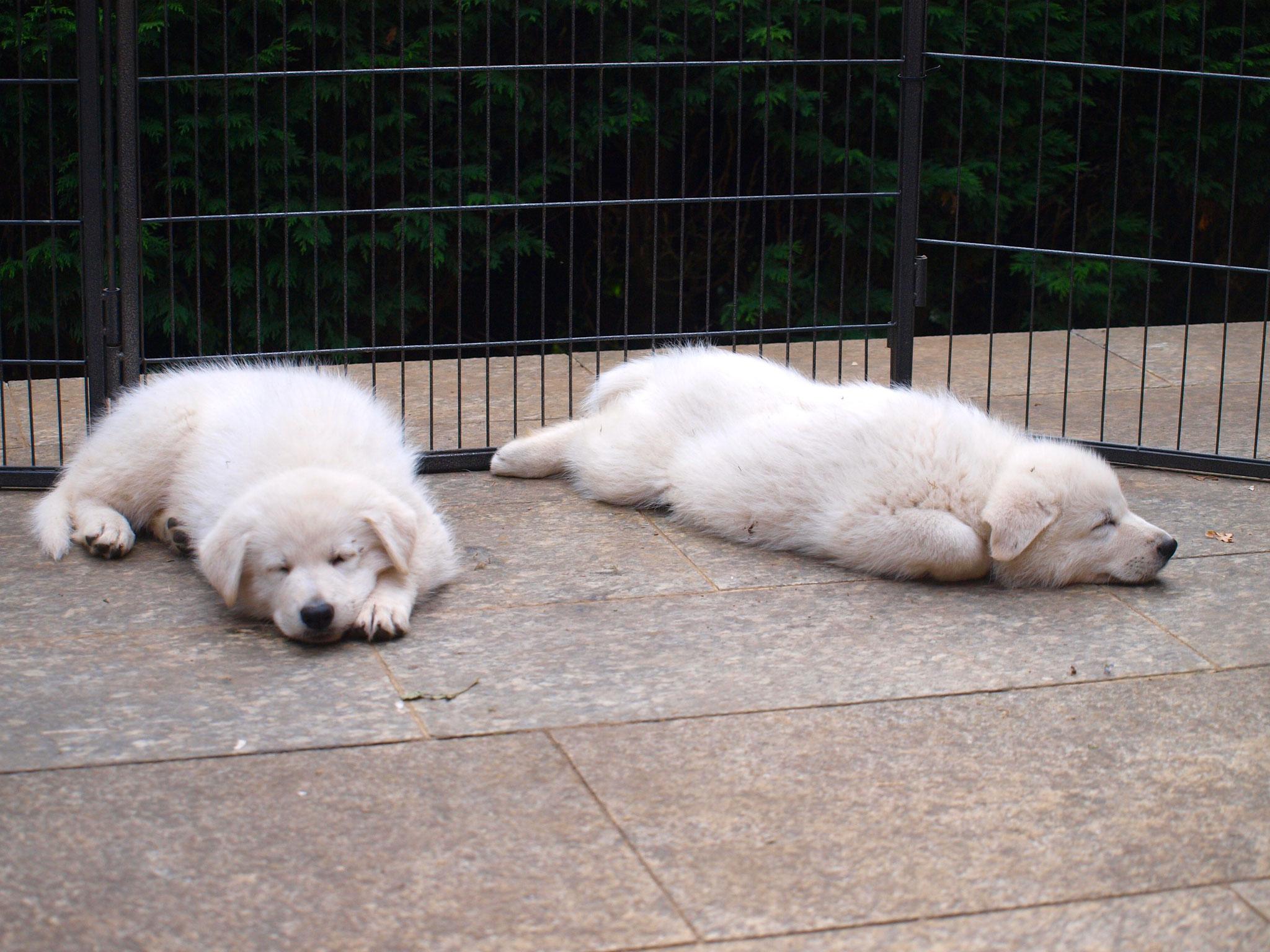 müde nach dem Ausflug