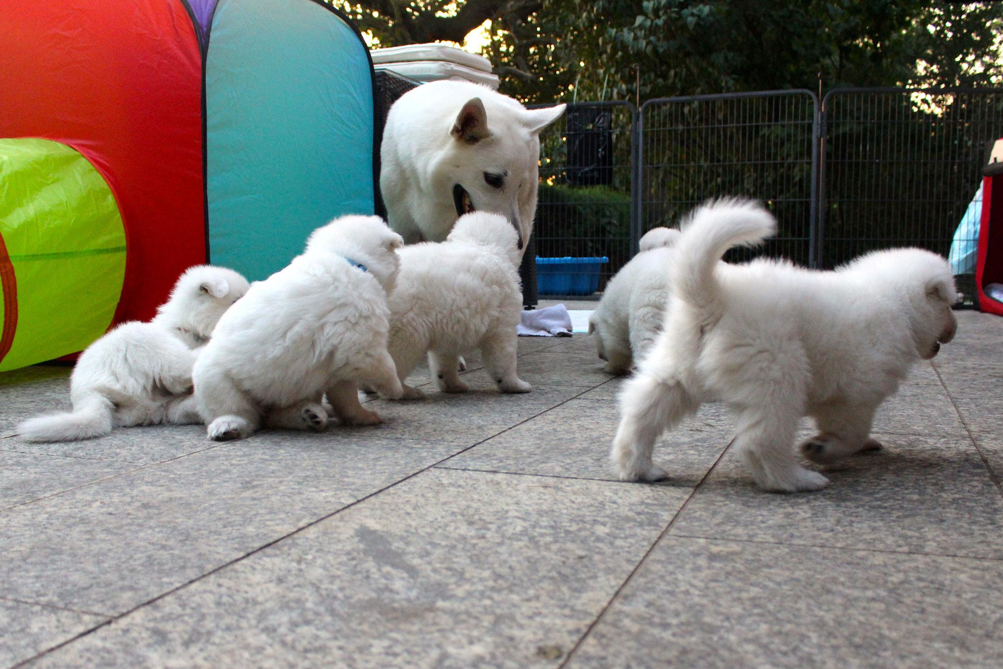 Milka und ihre Welpen