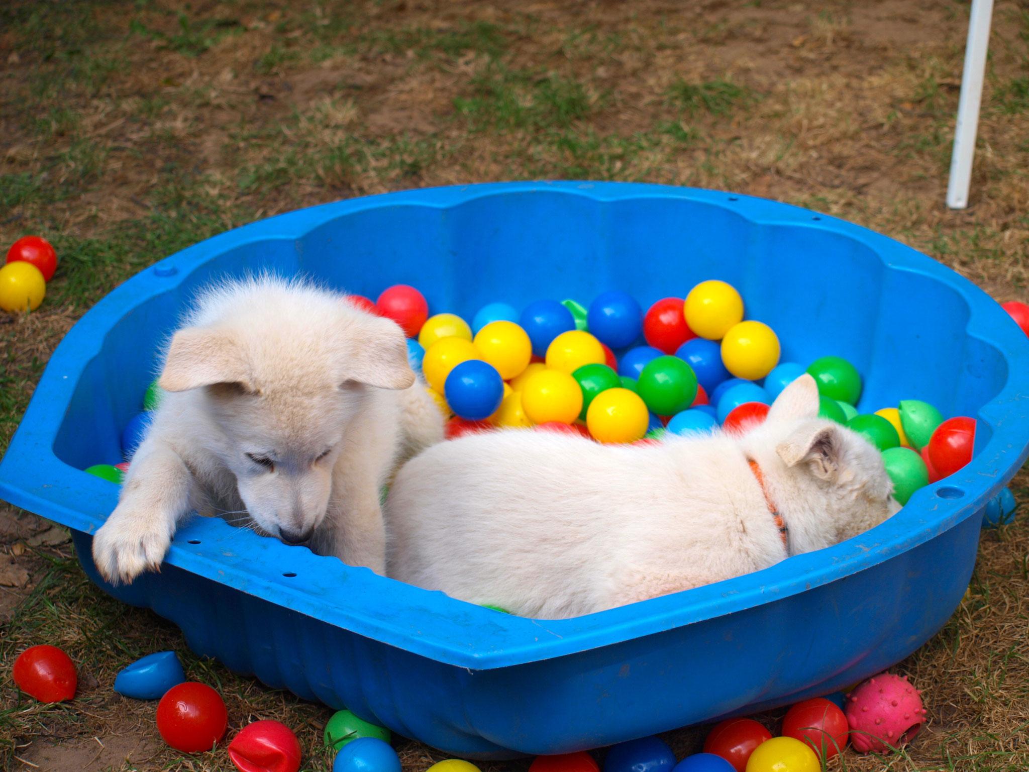 Slush und Leona im Bällebad