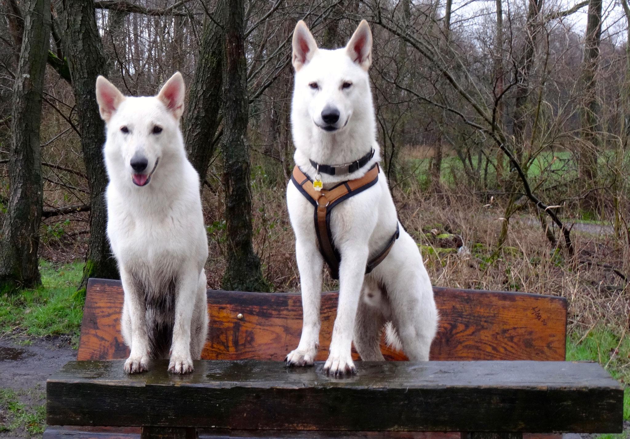 Milka & Buddy