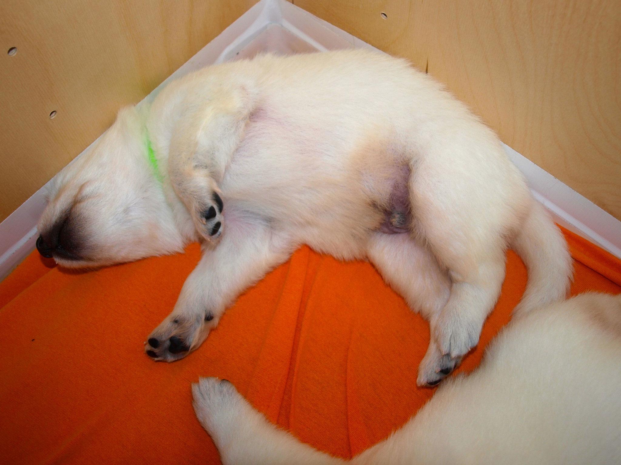 Cinder in seiner LieblingsSchlafposition