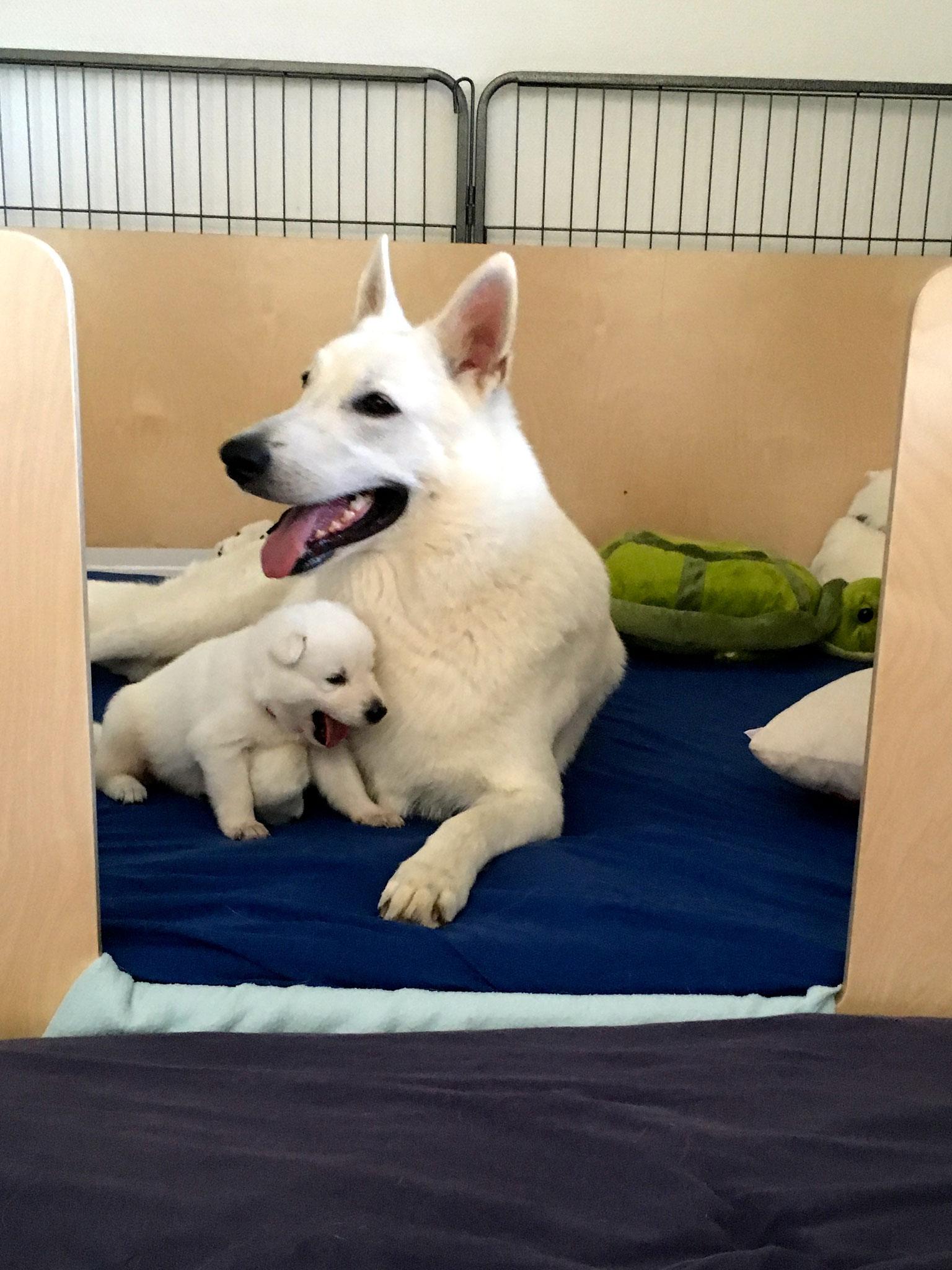 Leona und Milka