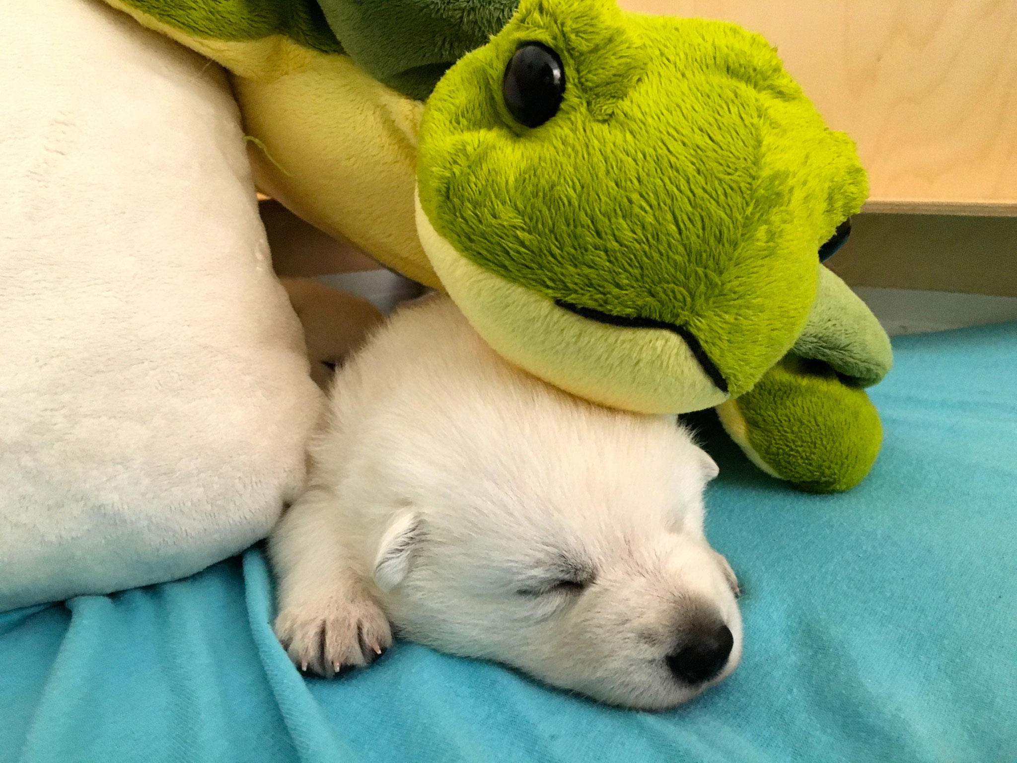 unter der Schildkröte lässt es sich gut schlafen