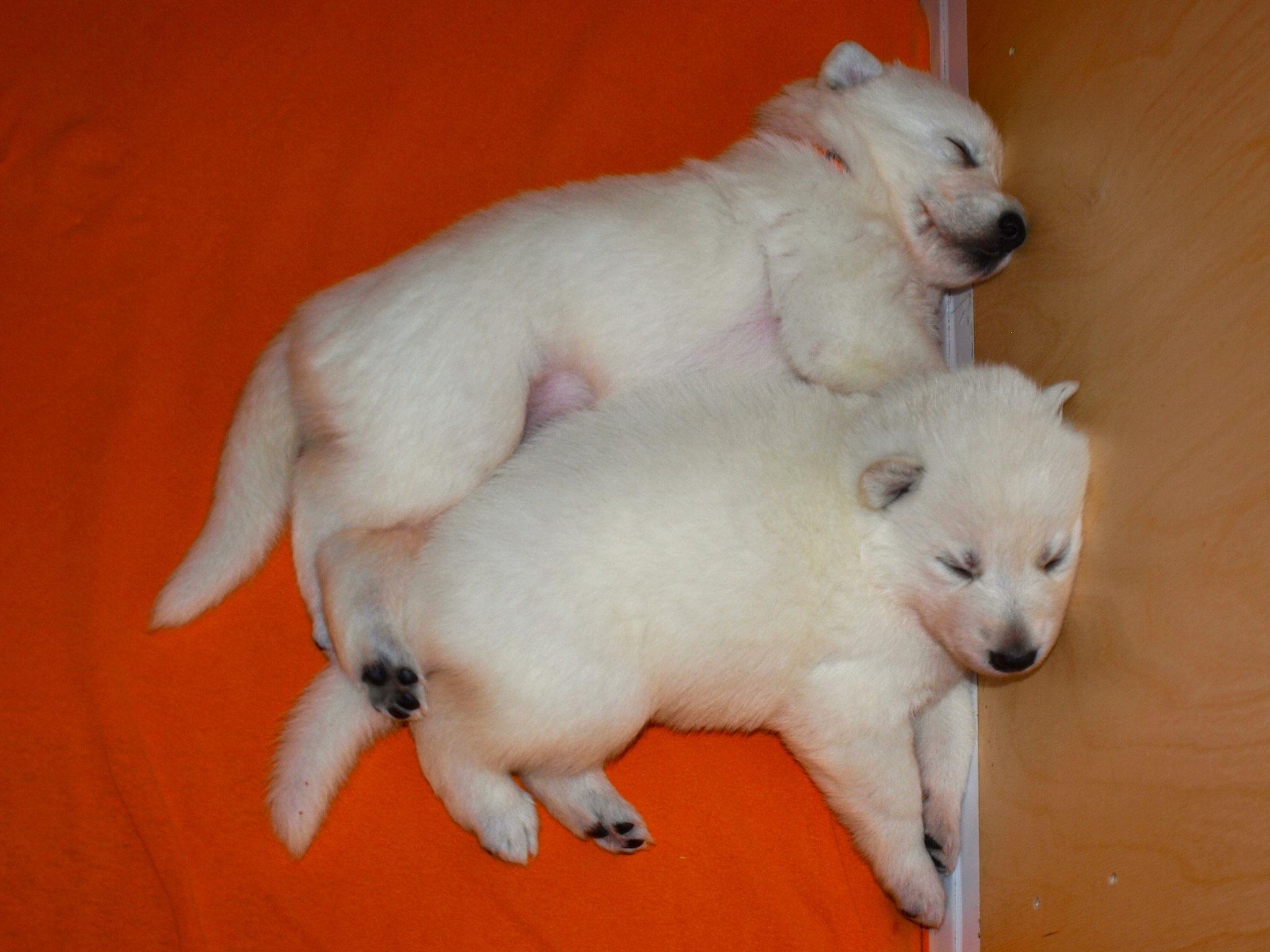 Gute Nacht von Leona und Icey