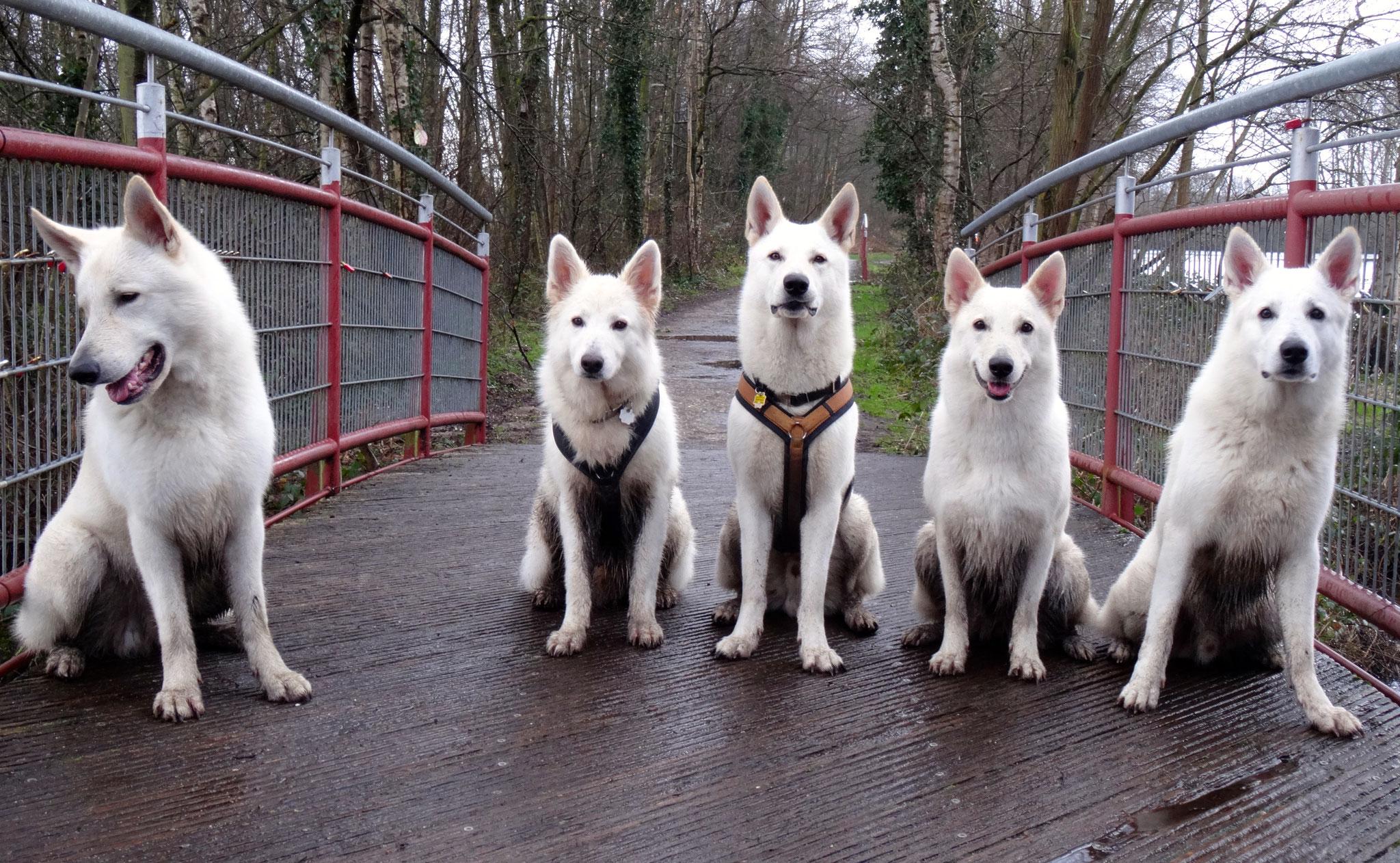 Abschlussbild auf der Brücke: Flaco - Chester - Buddy - Milka - Nikan