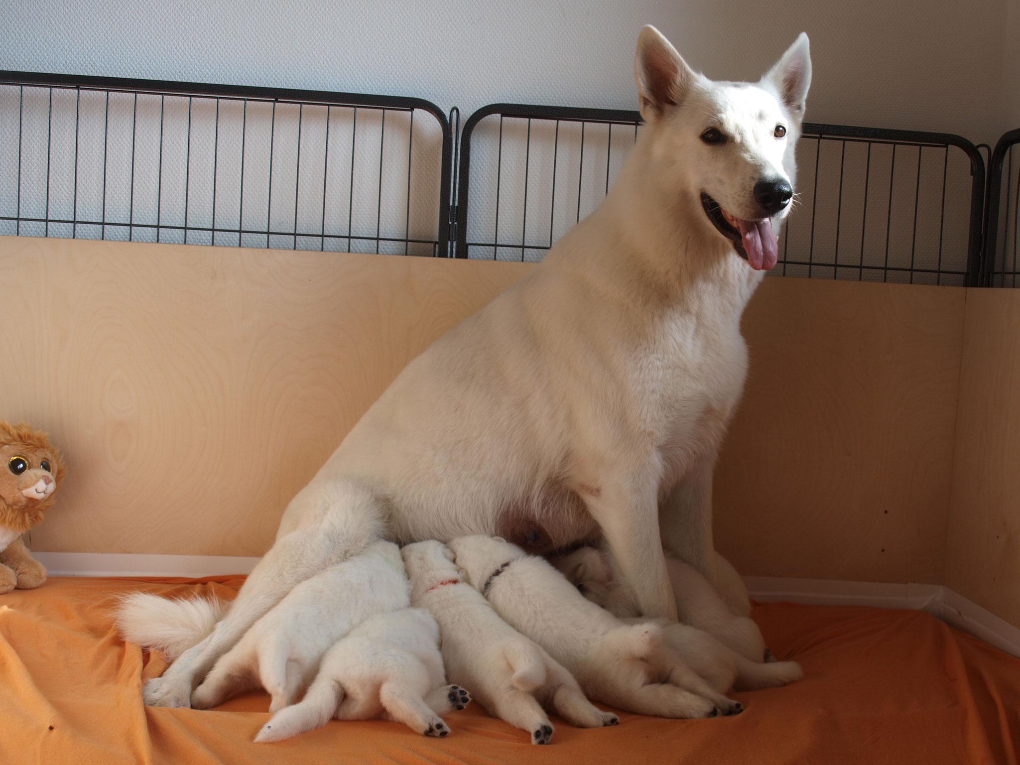Milka säugt ab und zu im Sitzen, so bekommt jeder was ab...