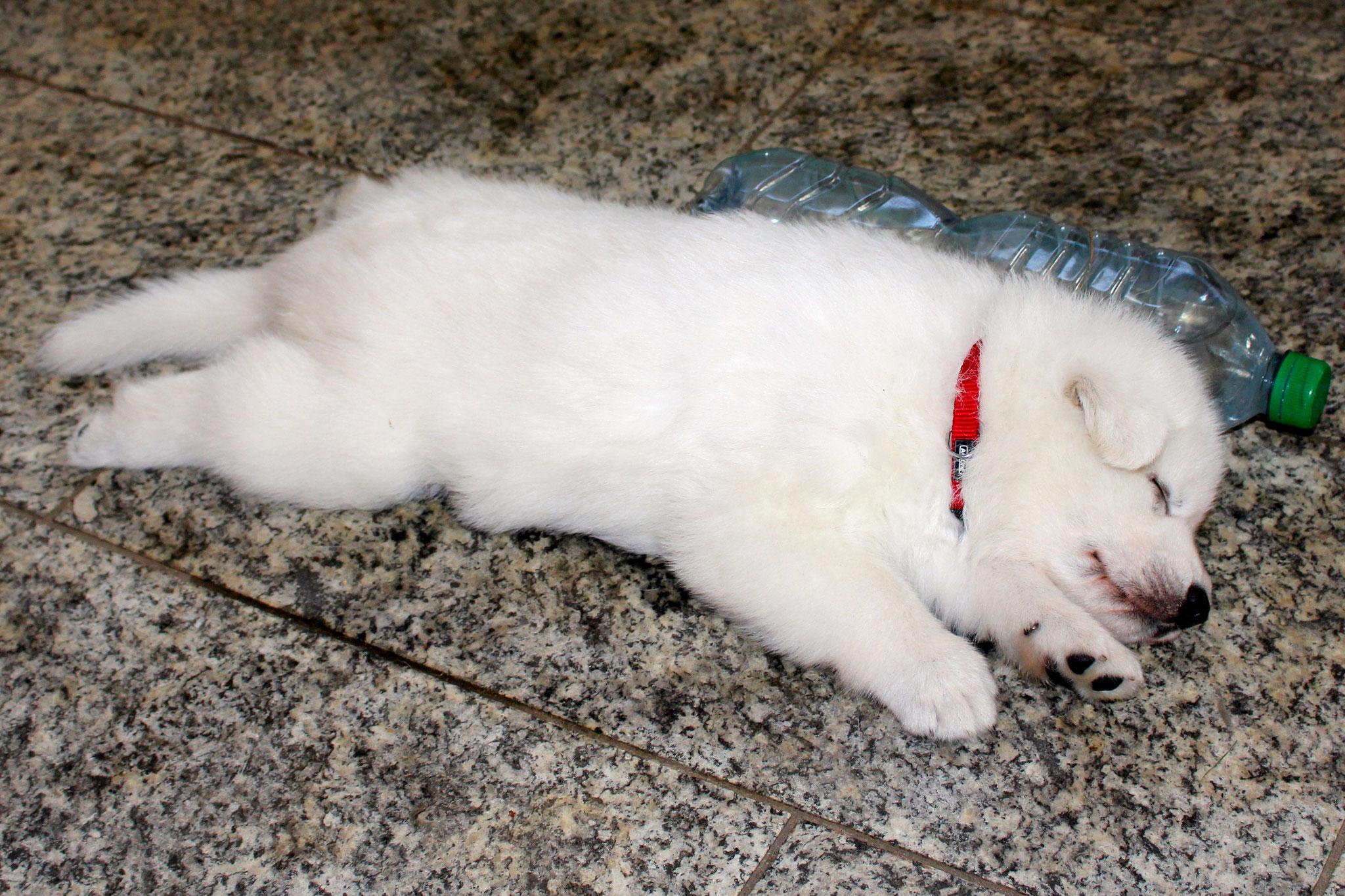 Pixy schläft