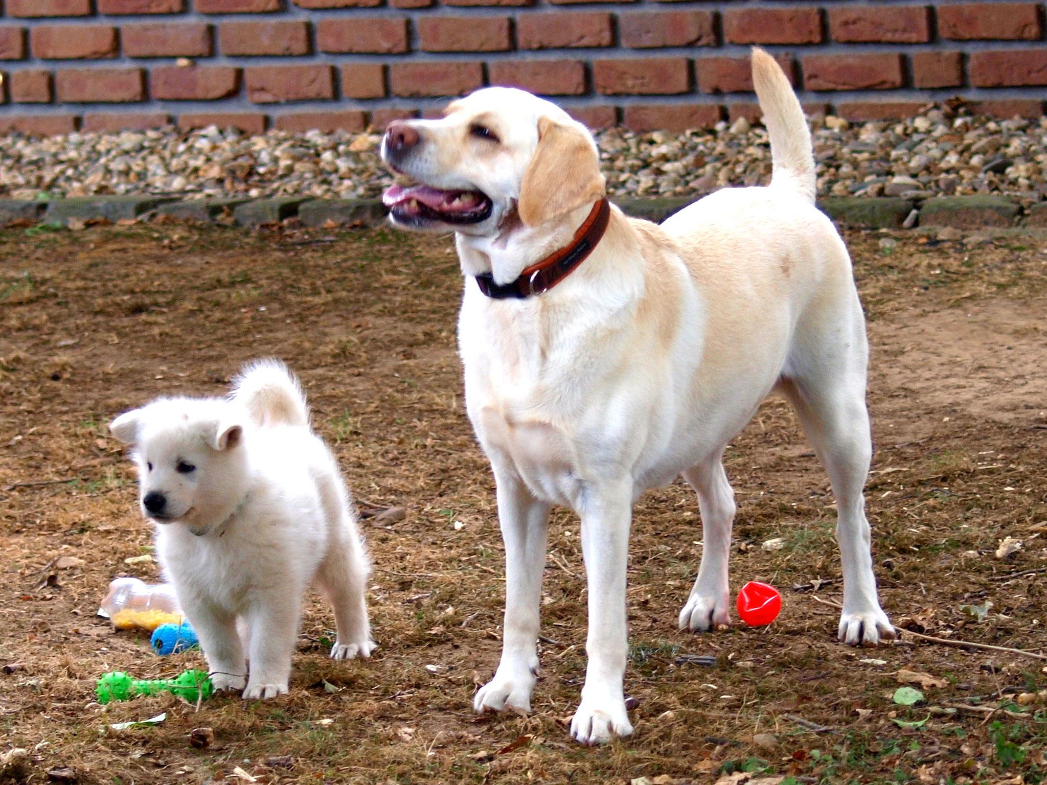 Maya und Buck