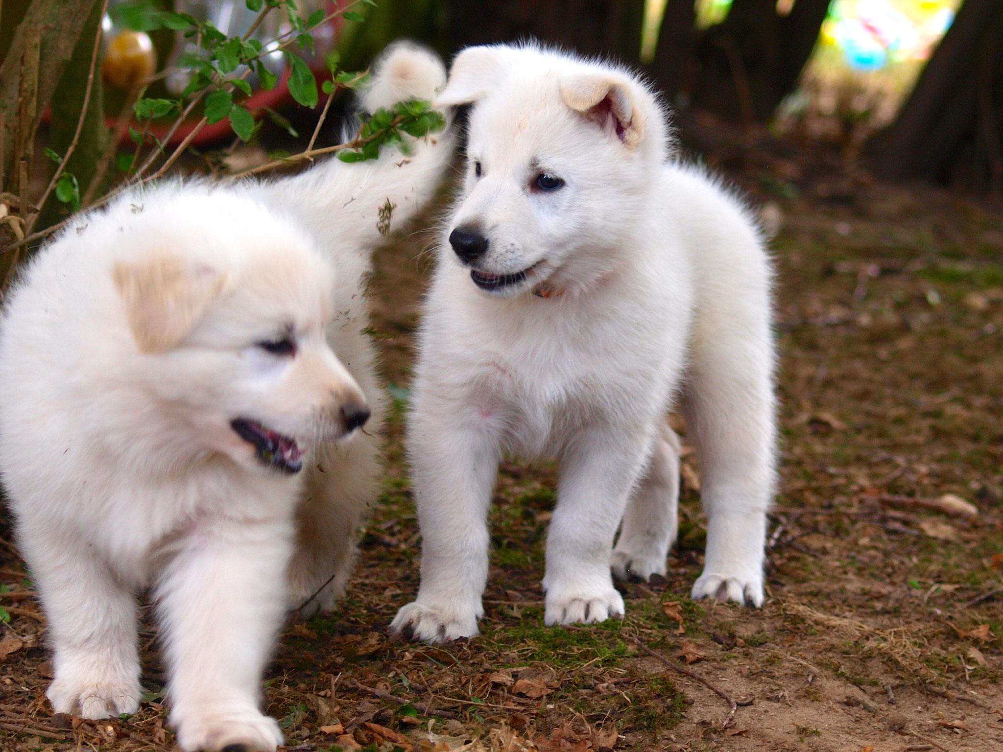 Cinder und Leona