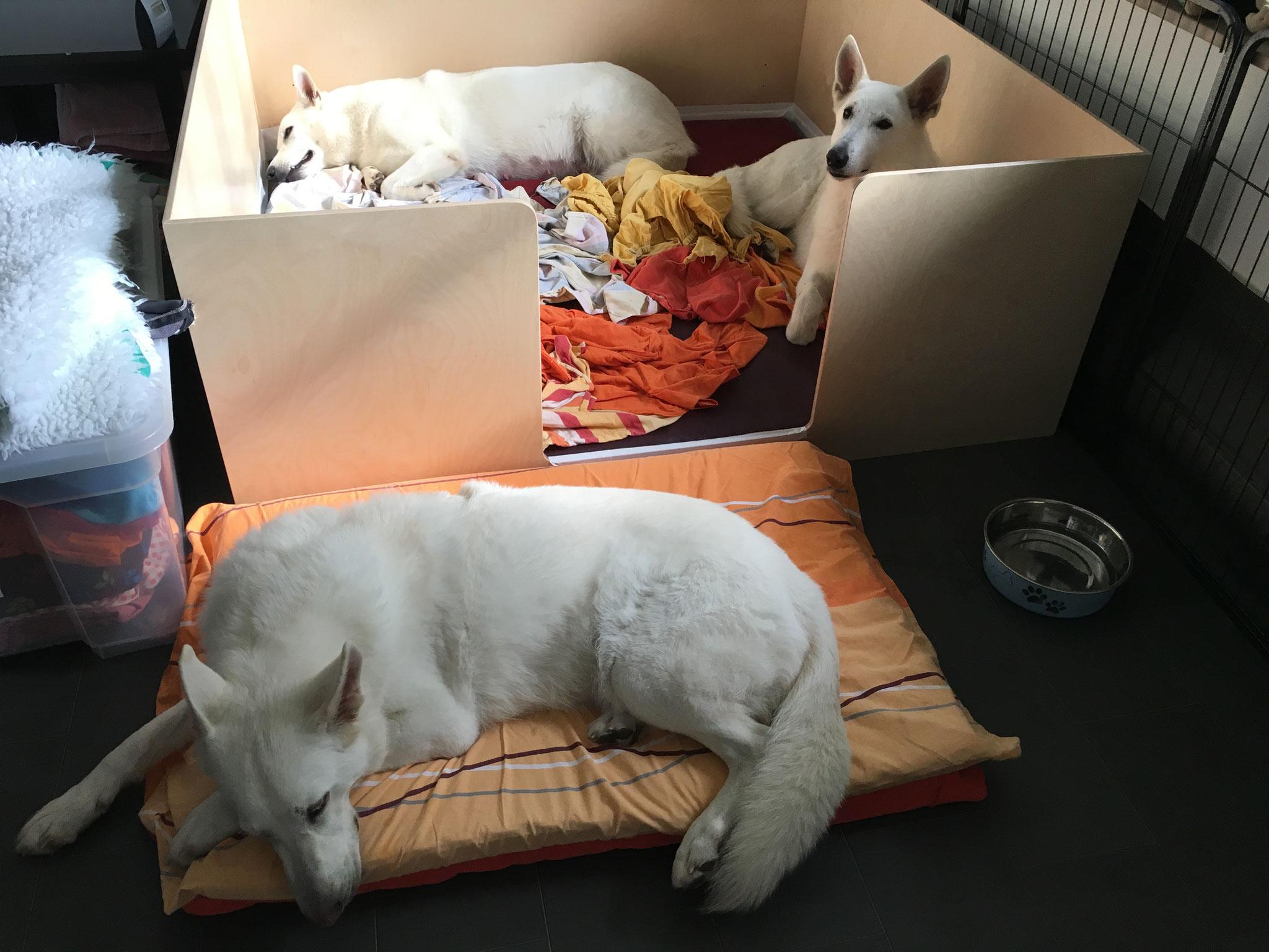 Die Familie bereitet sich auf das Großereignis vor, Milka und ihre Mama in der Kiste, Gaia wacht davor