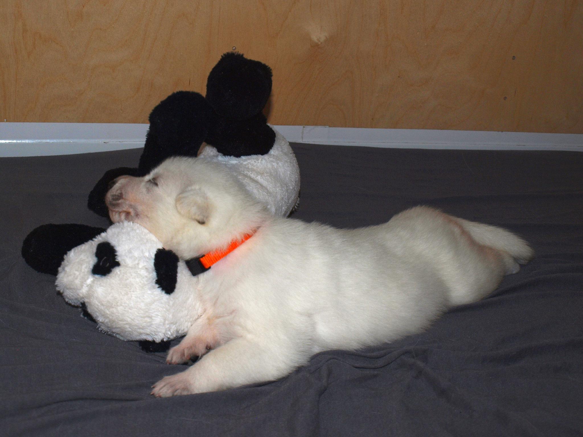 Leona und der Panda