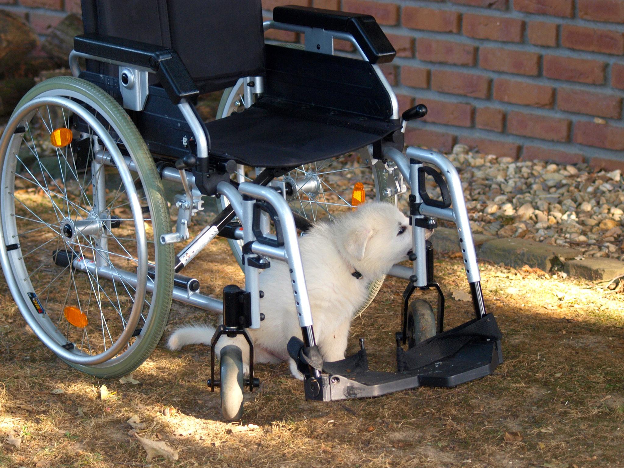 der Rollstuhl wird untersucht