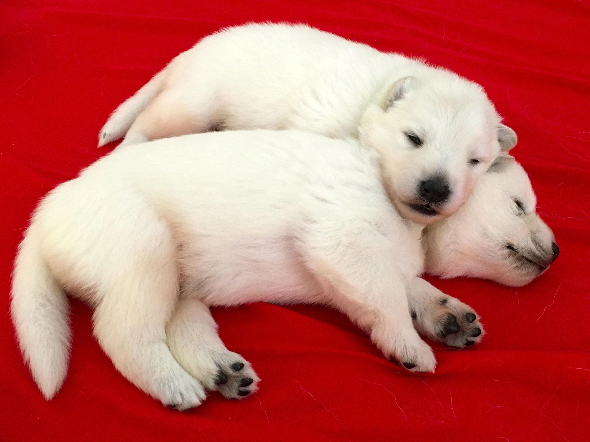 Cinder und Icey
