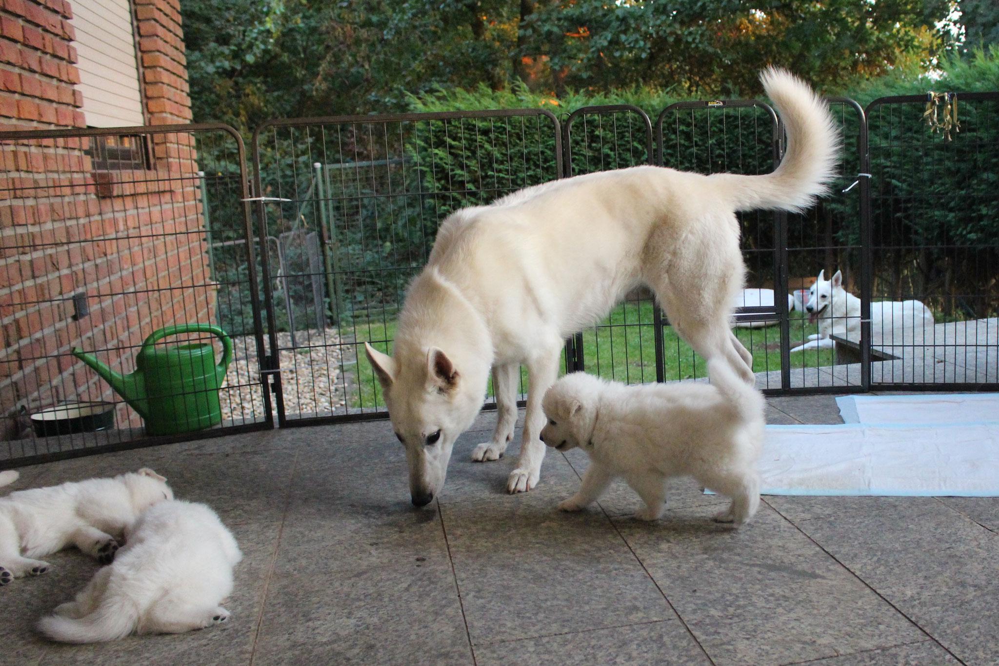 Milka macht eine Pause, während Arjuna Baby sittet