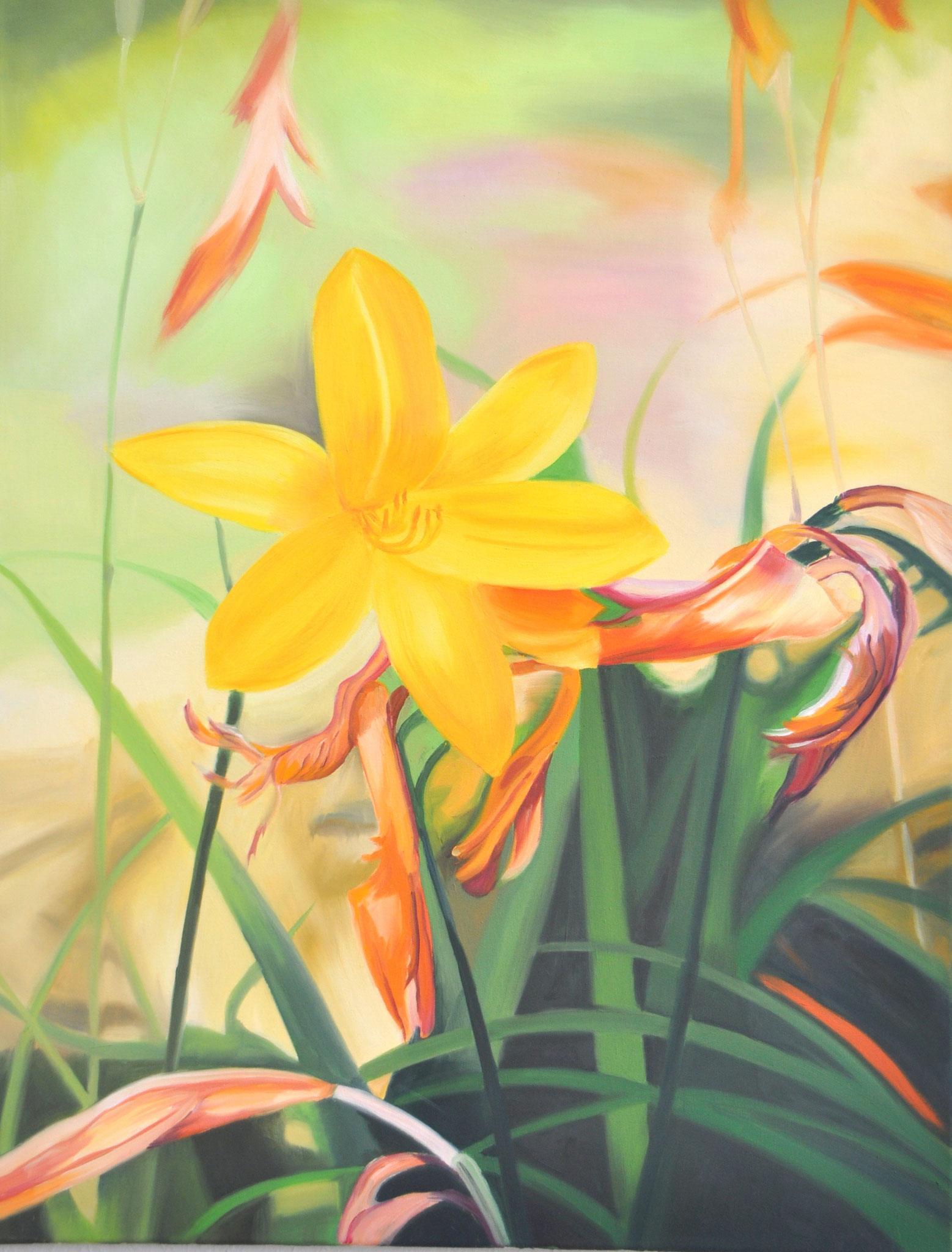 Gelbe Taglilie, 78 x 60 cm