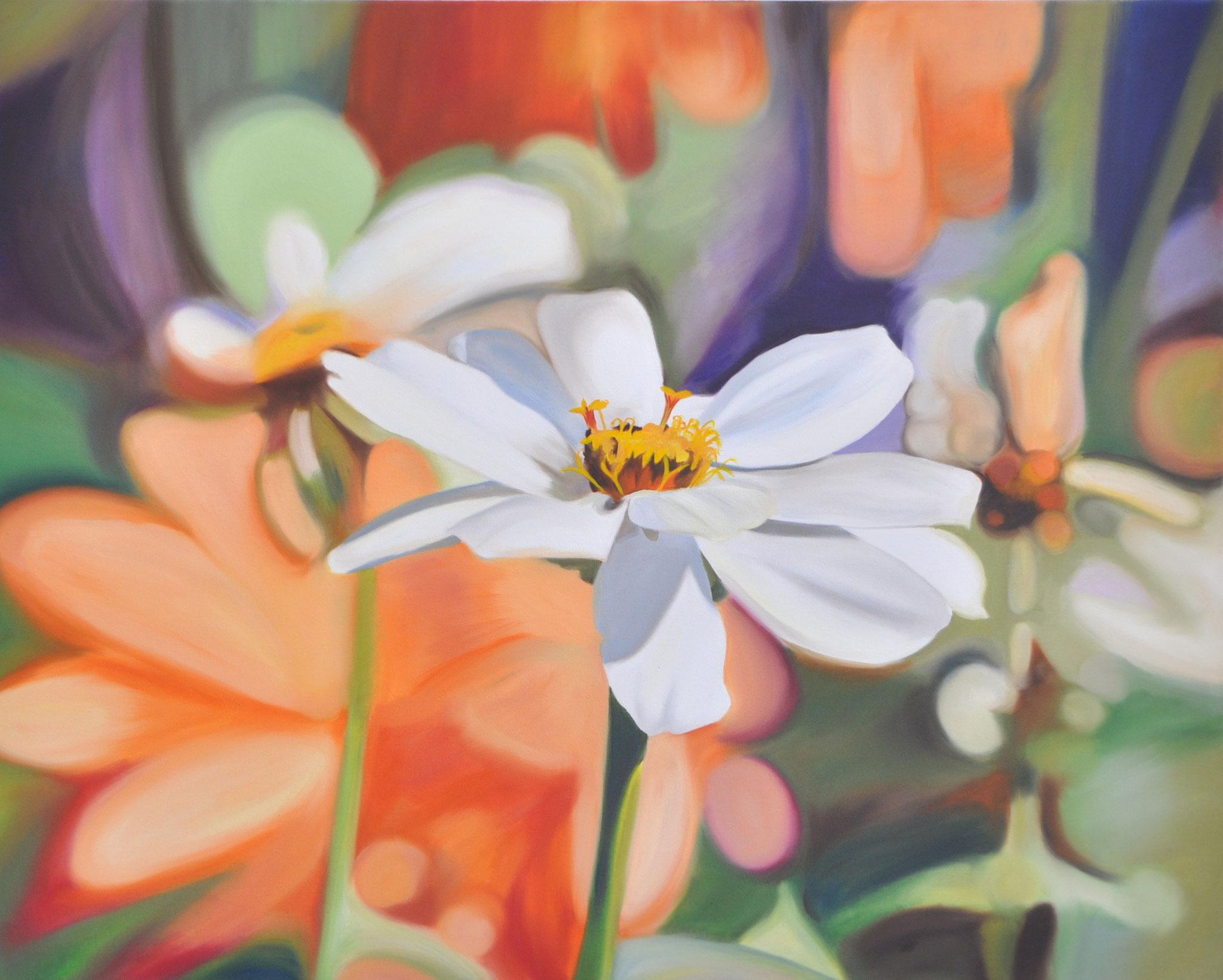 Weiße Zinnie vor Orange, 80 x 100 cm