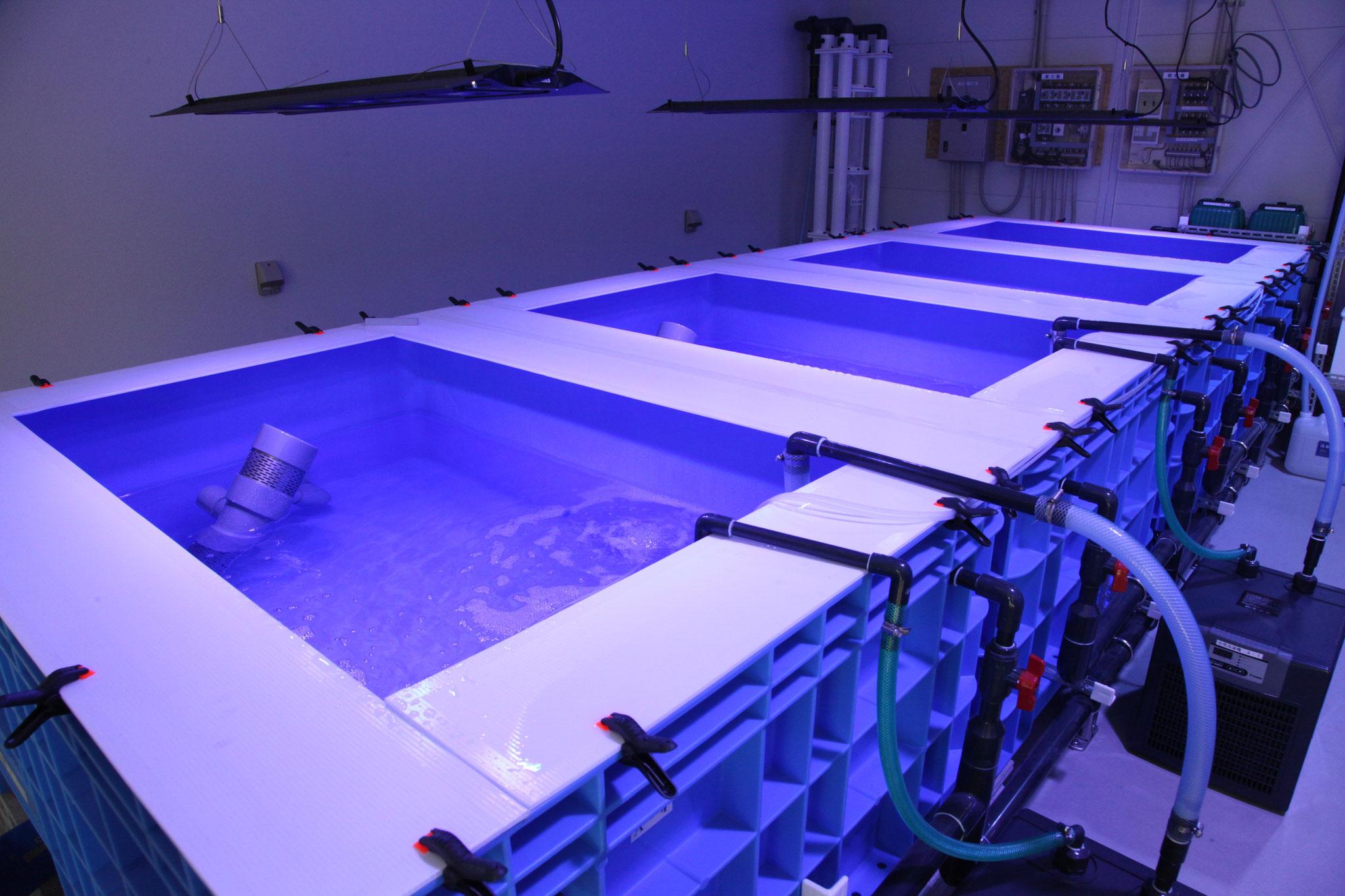 この規模で有用性の高い実験水槽は他の大学にはありません.
