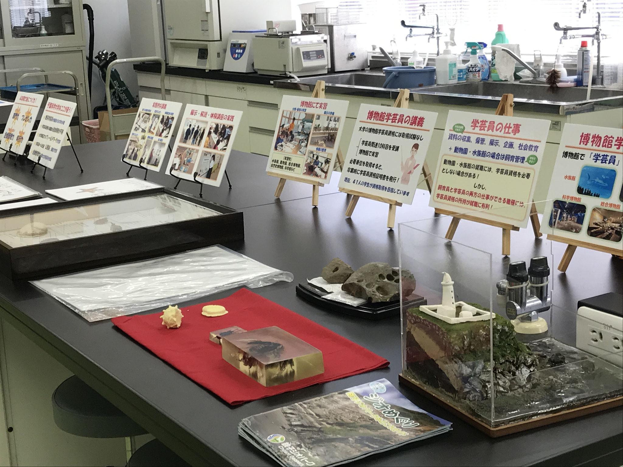 【来場型】博物館学芸員課程の紹介