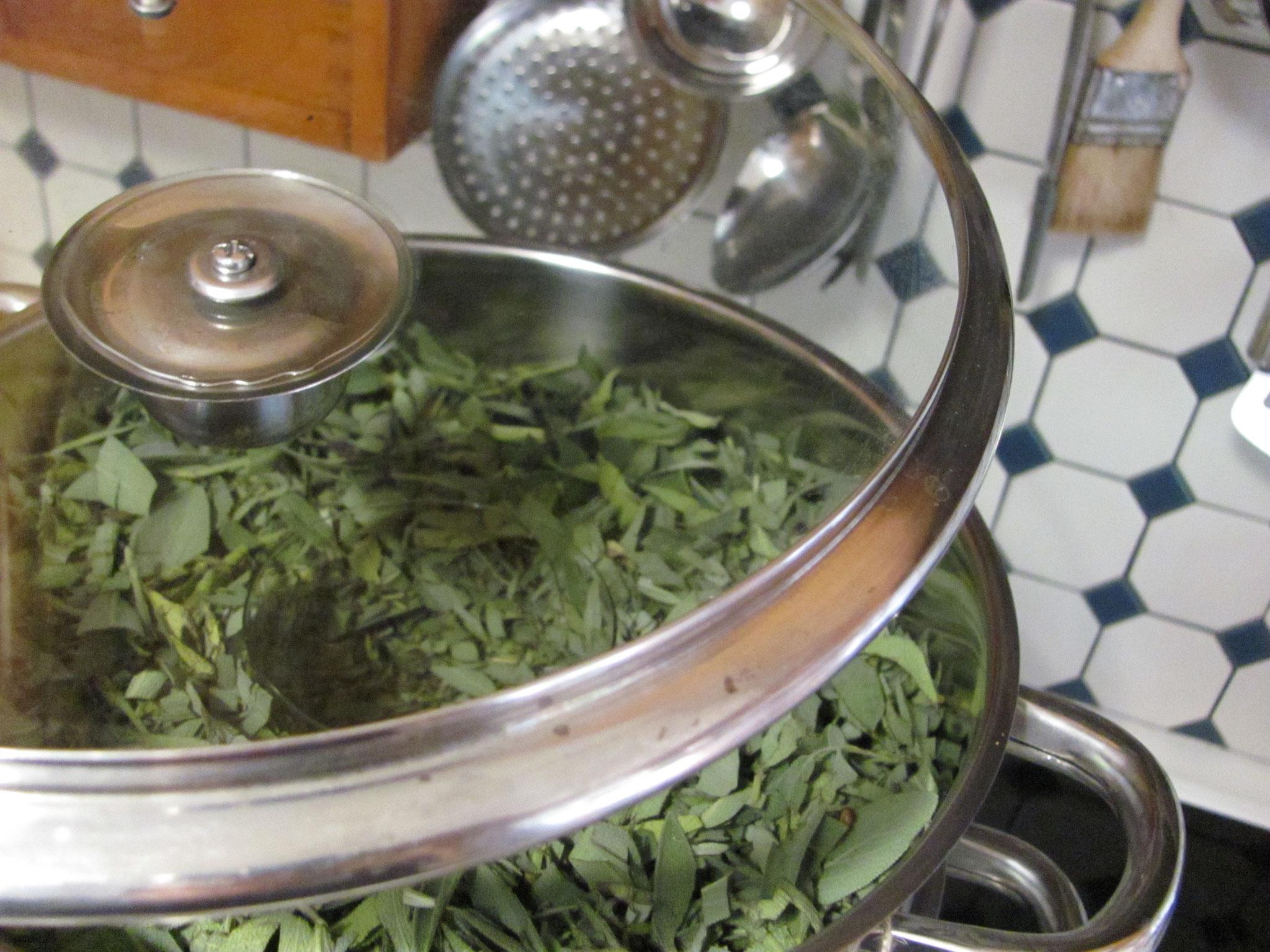 Topf mit Pflanzenmaterial befüllen, Teller weggeben
