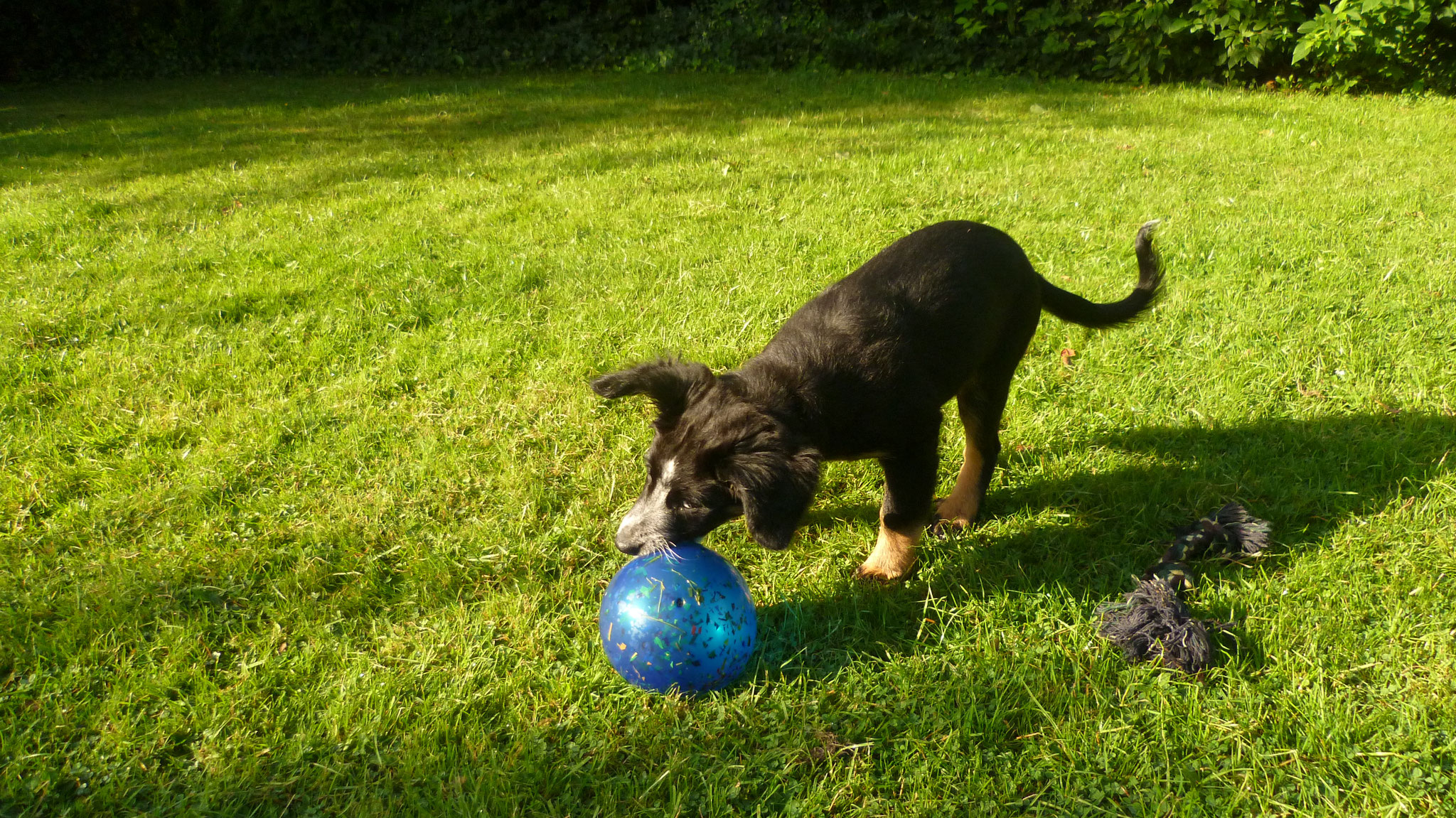 Ball spielen im Garten