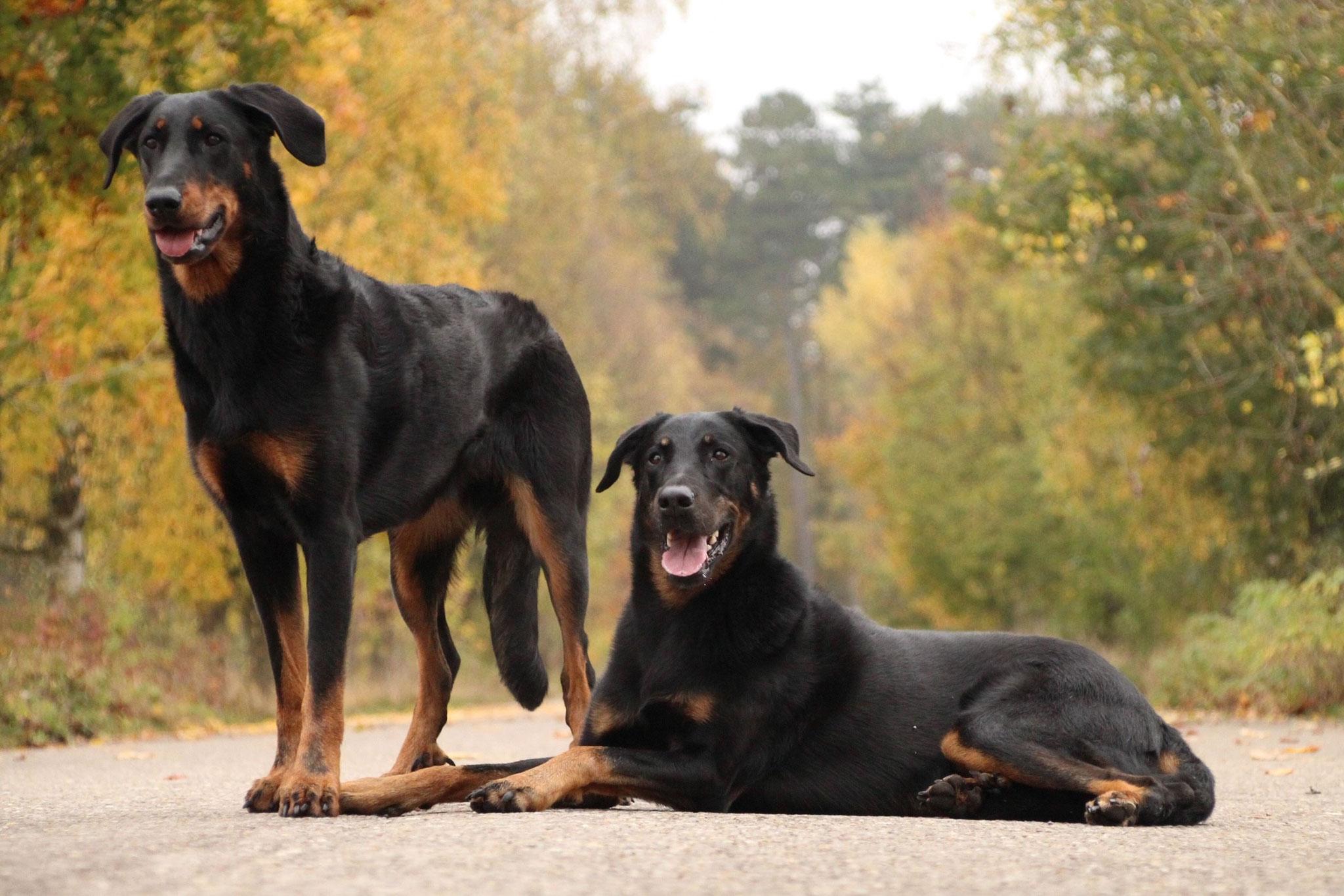 Bagheera und Neva